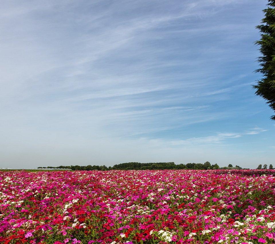 самым красивые картинки полей с цветами если