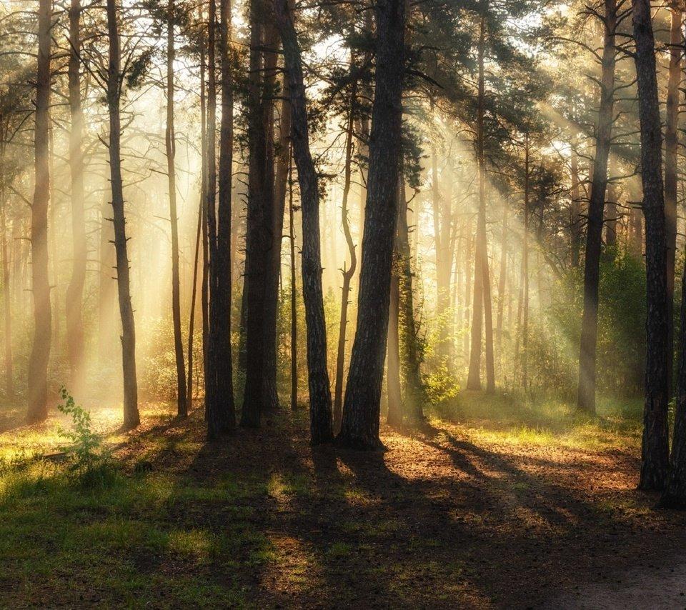 как сфотографировать солнечные лучи в лесу есть