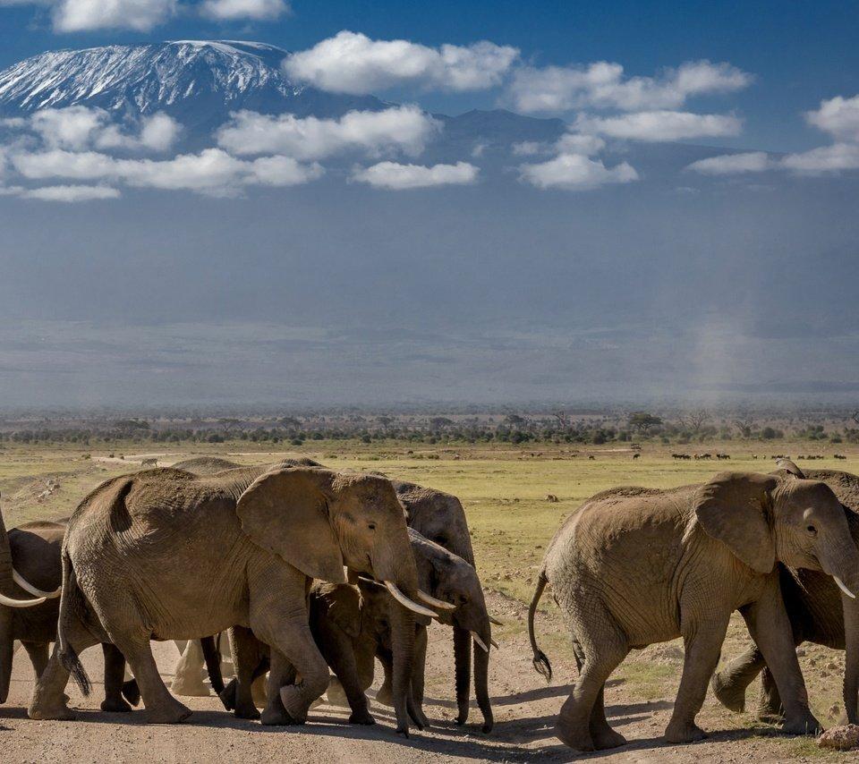 обитатели и природа в африке фото карандашом дочь морского царя