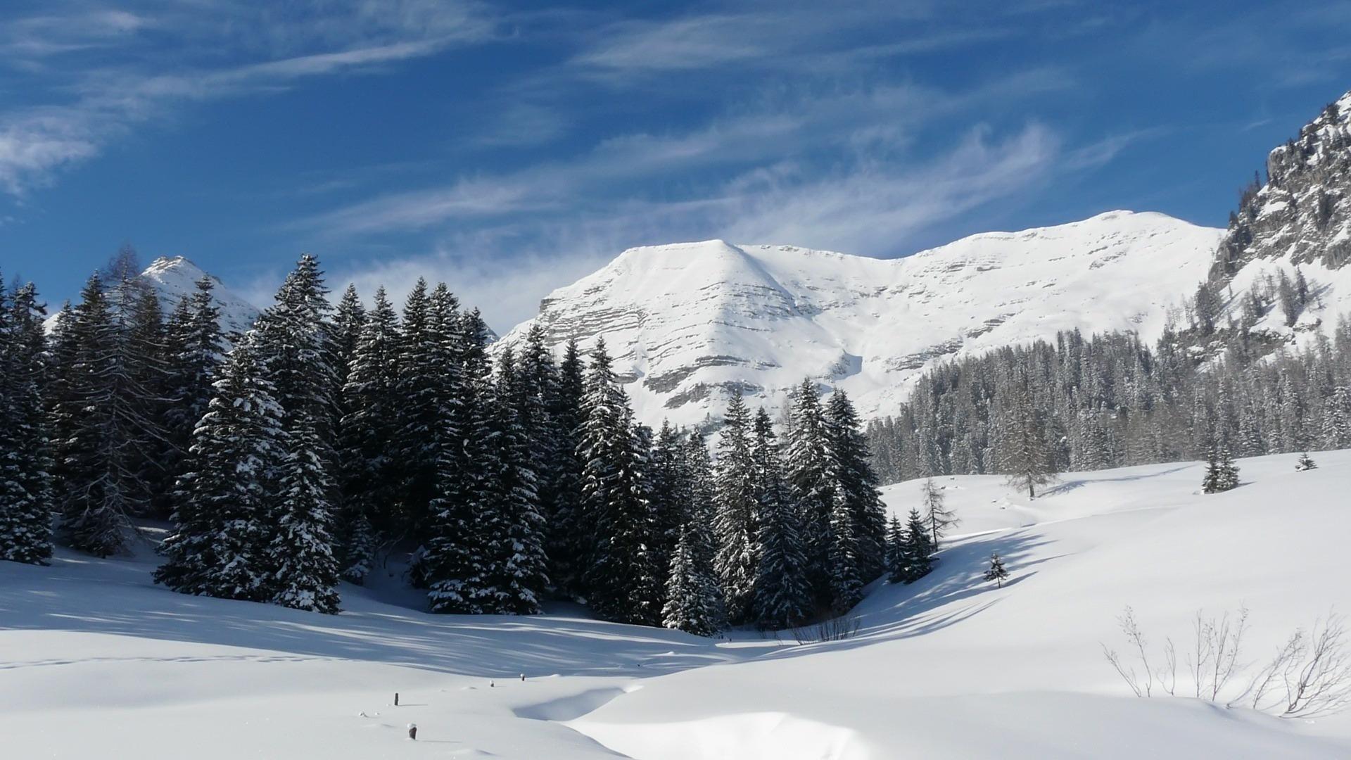 ели снег зима горы подборки