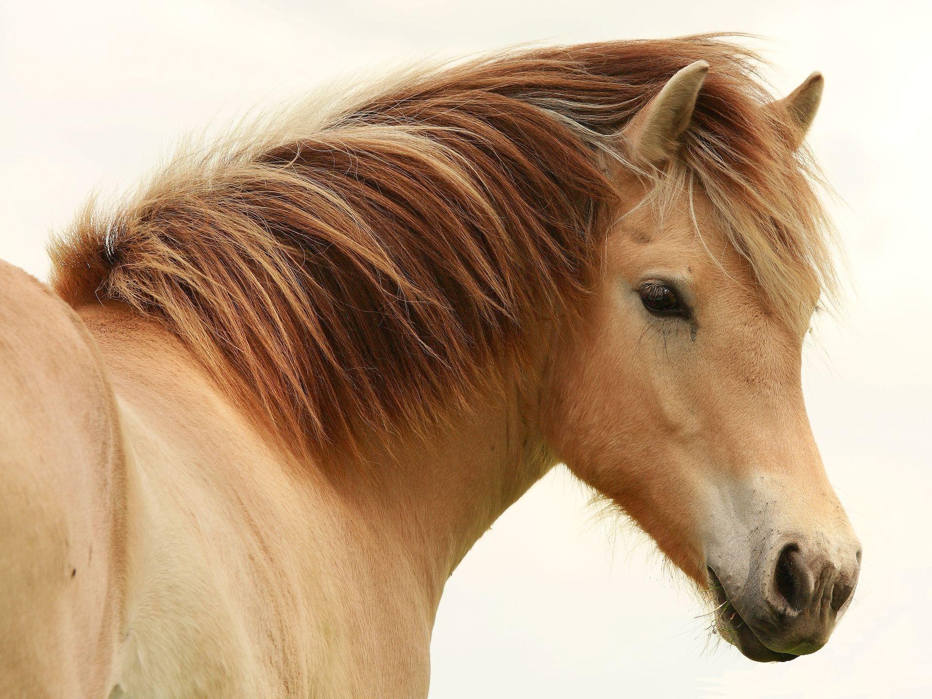 лошадь с гривой  № 3127115 загрузить
