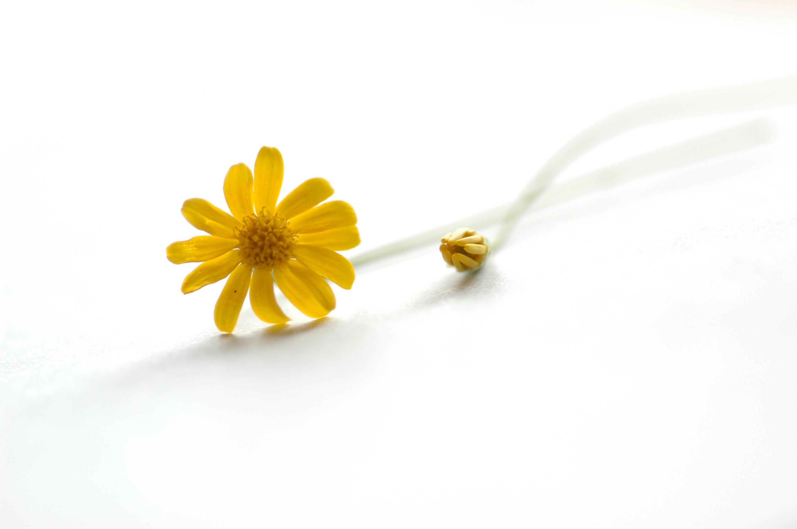 белый цветочек без смс