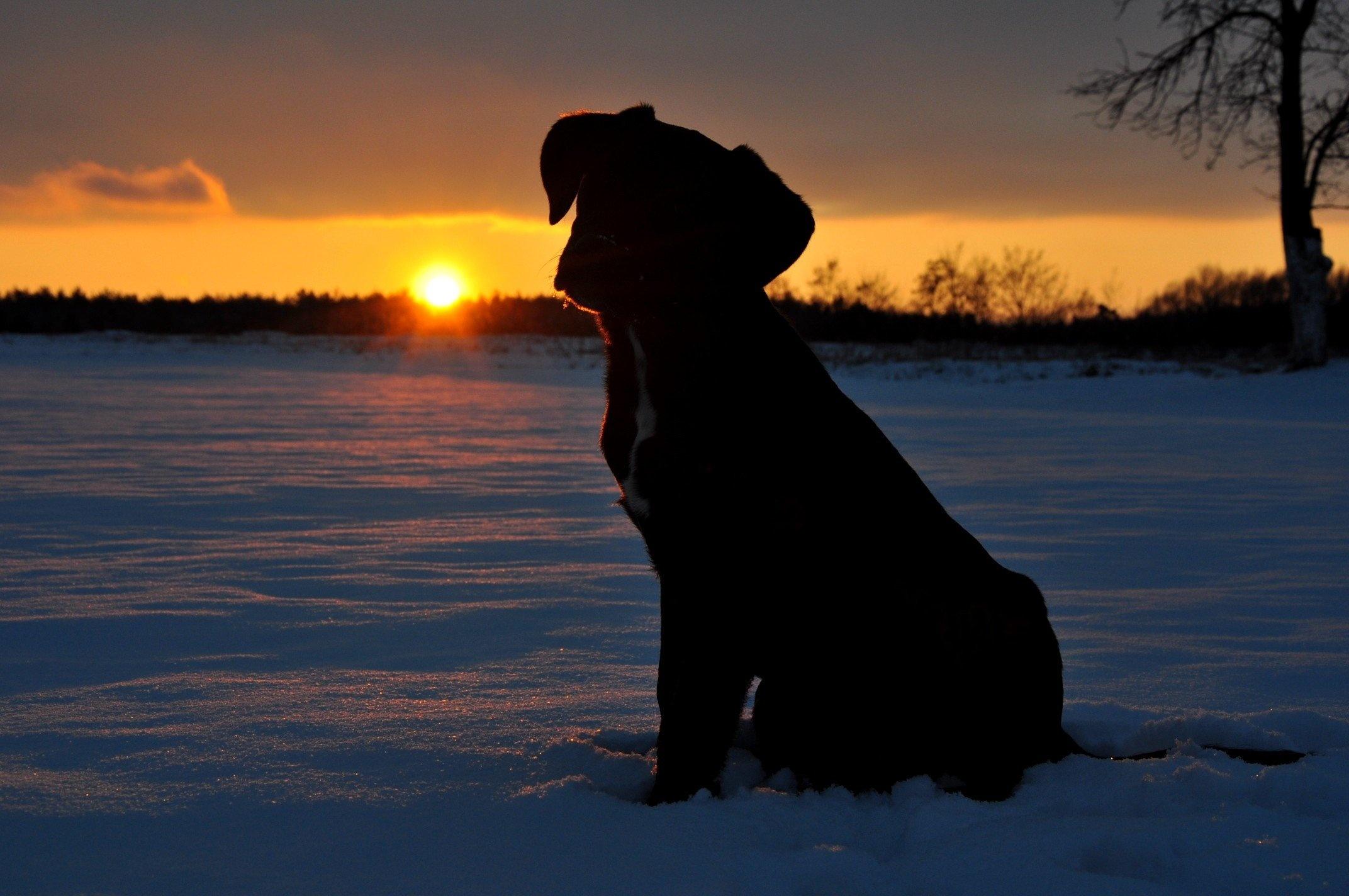 Собака на фоне заката  № 2038708 бесплатно
