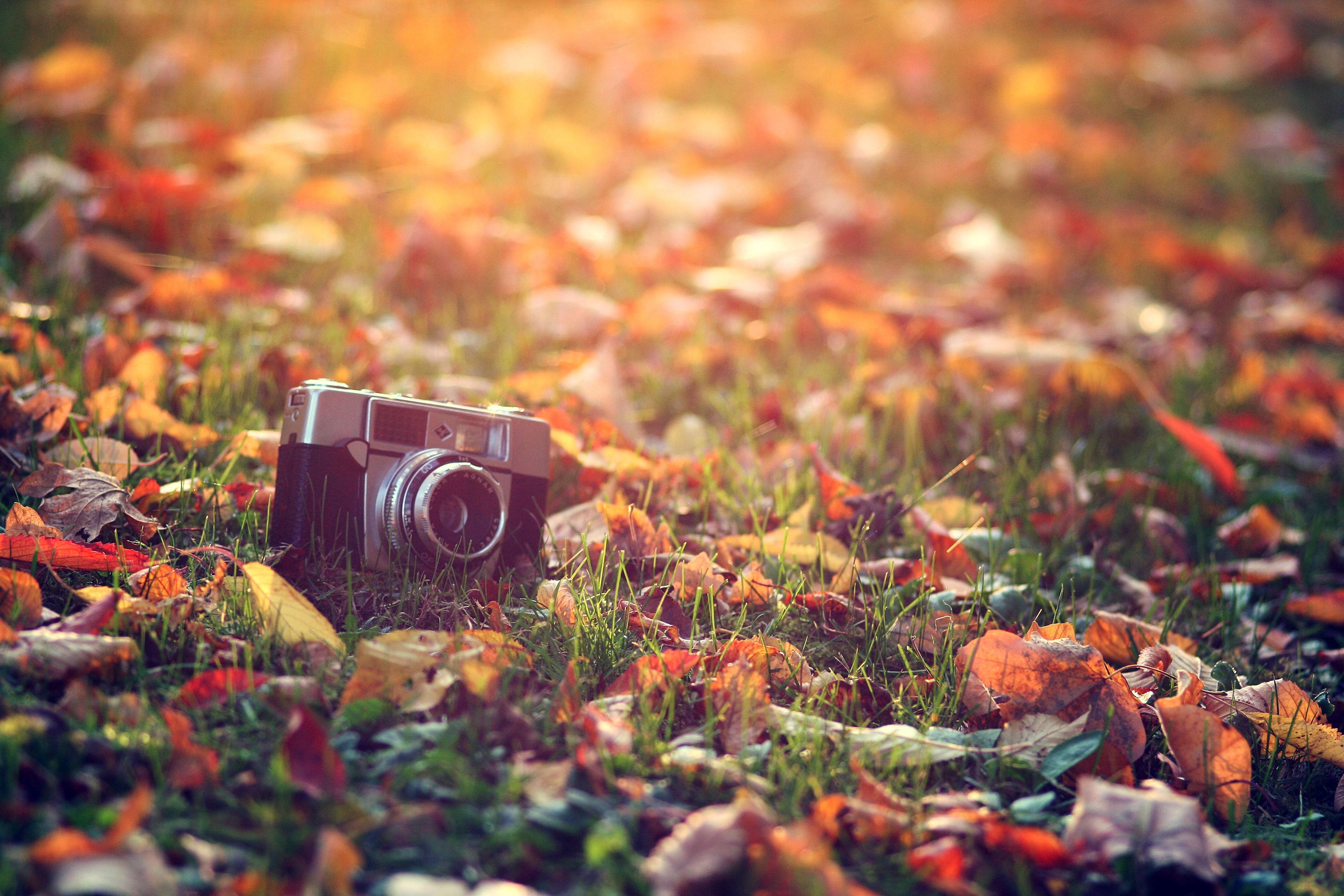 Цветы фотоаппарат дождь бесплатно