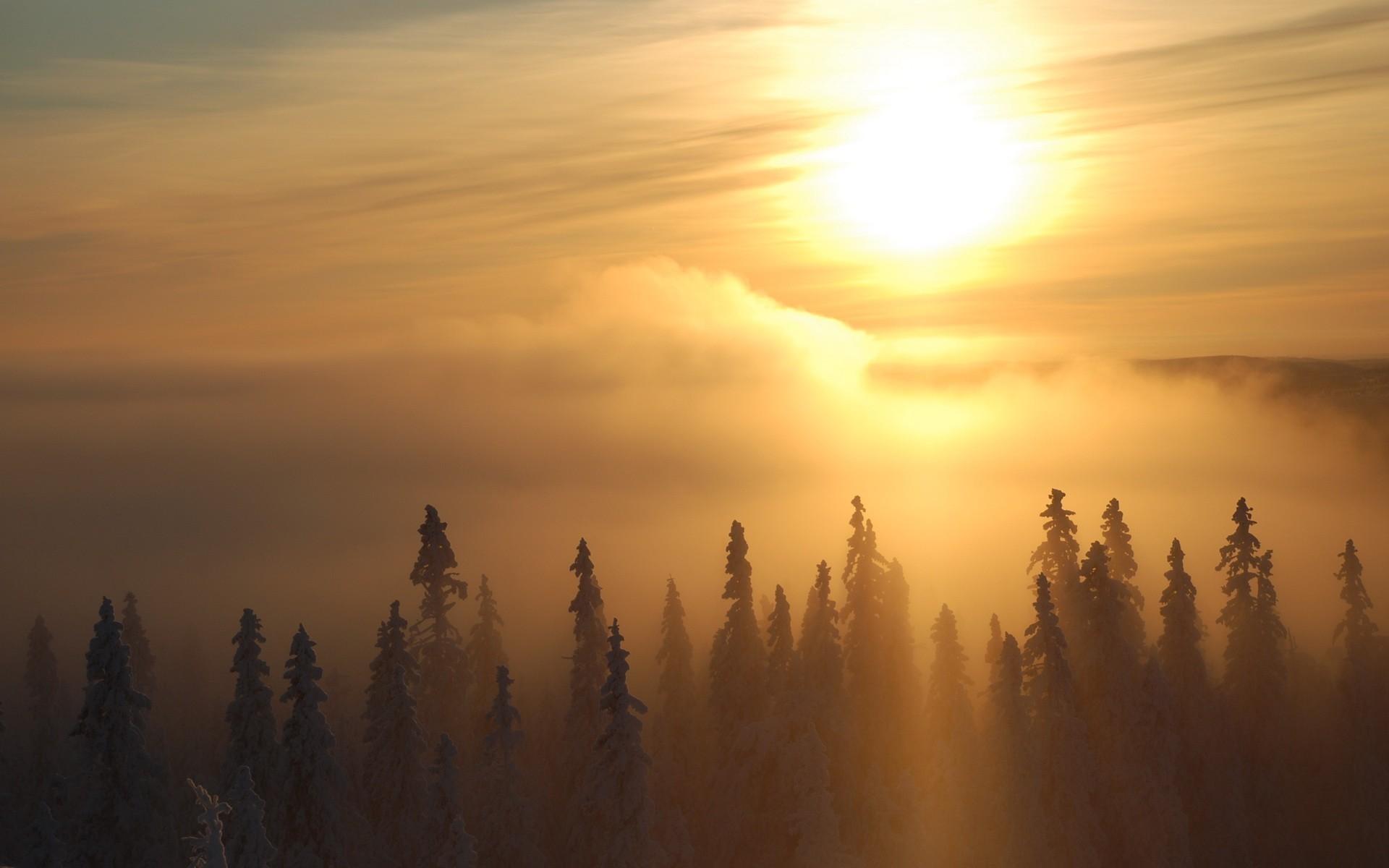 Закат в тумане в лесу загрузить