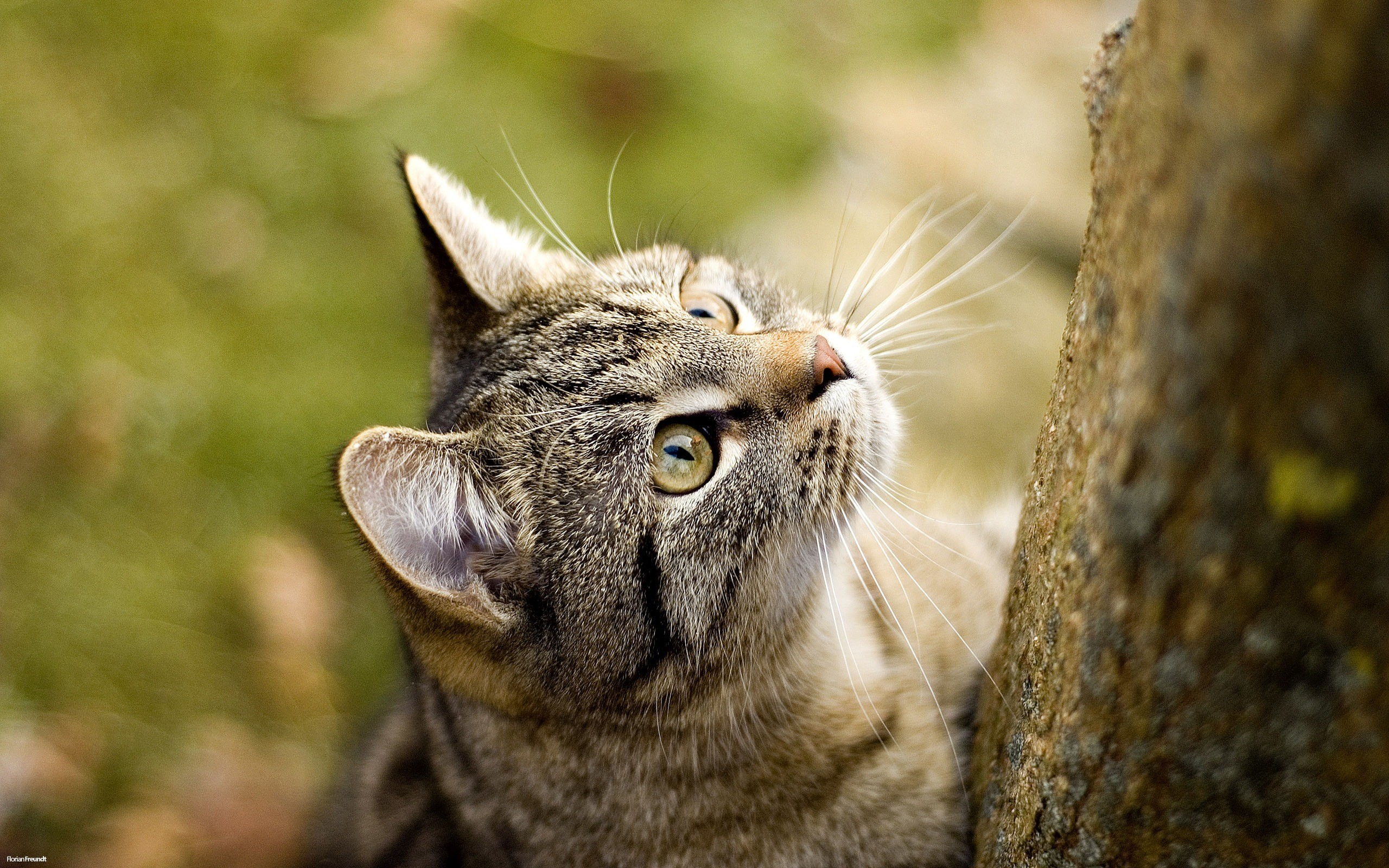 how to keep cat litter box odor free