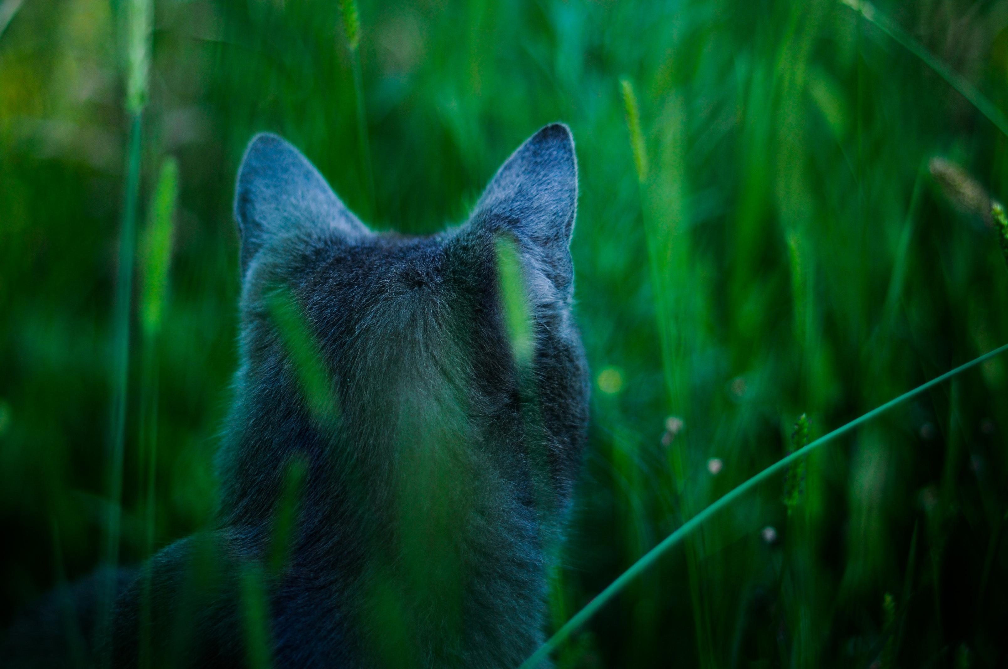 затылок котенка скачать