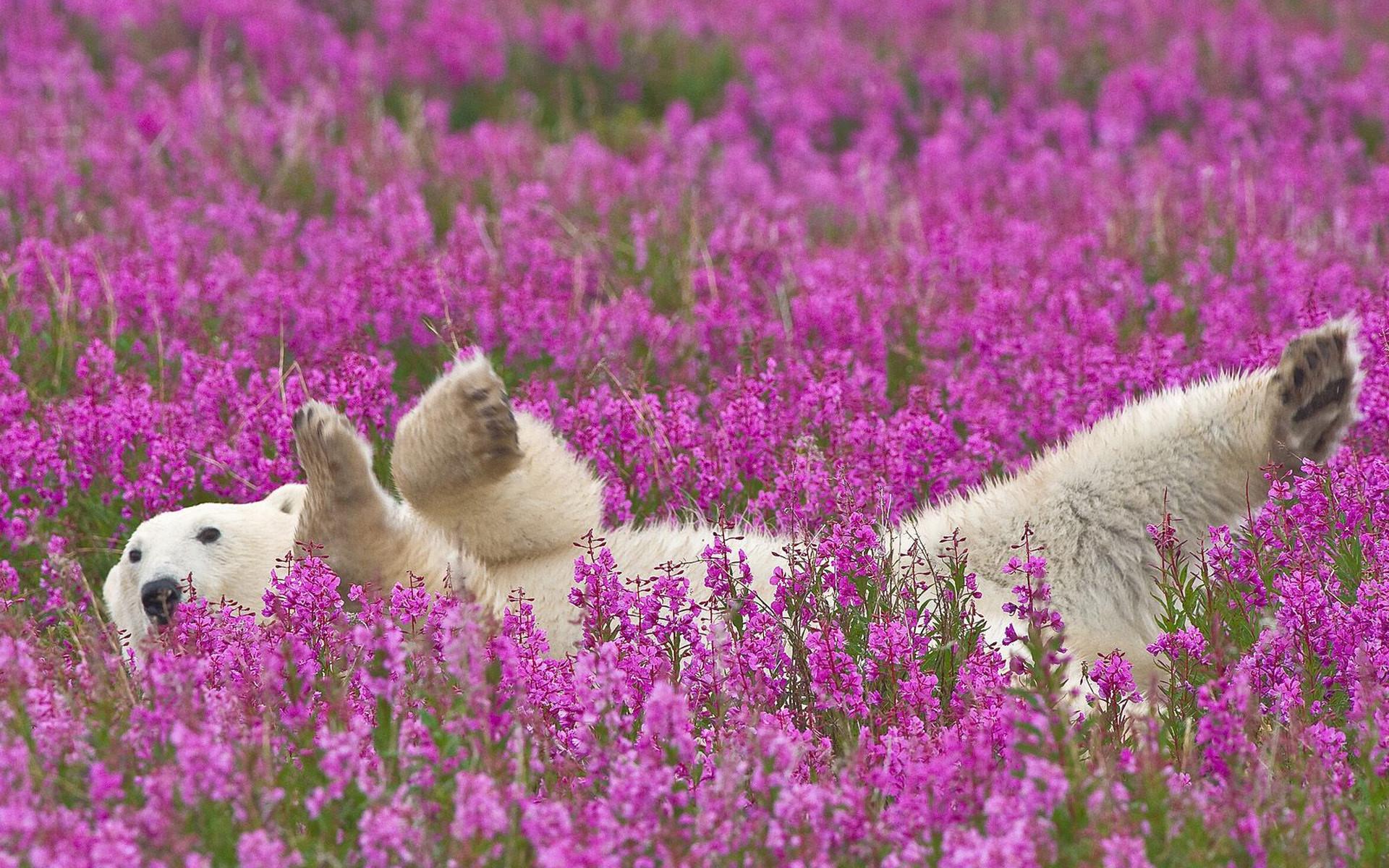 Очень красивое природы цветы
