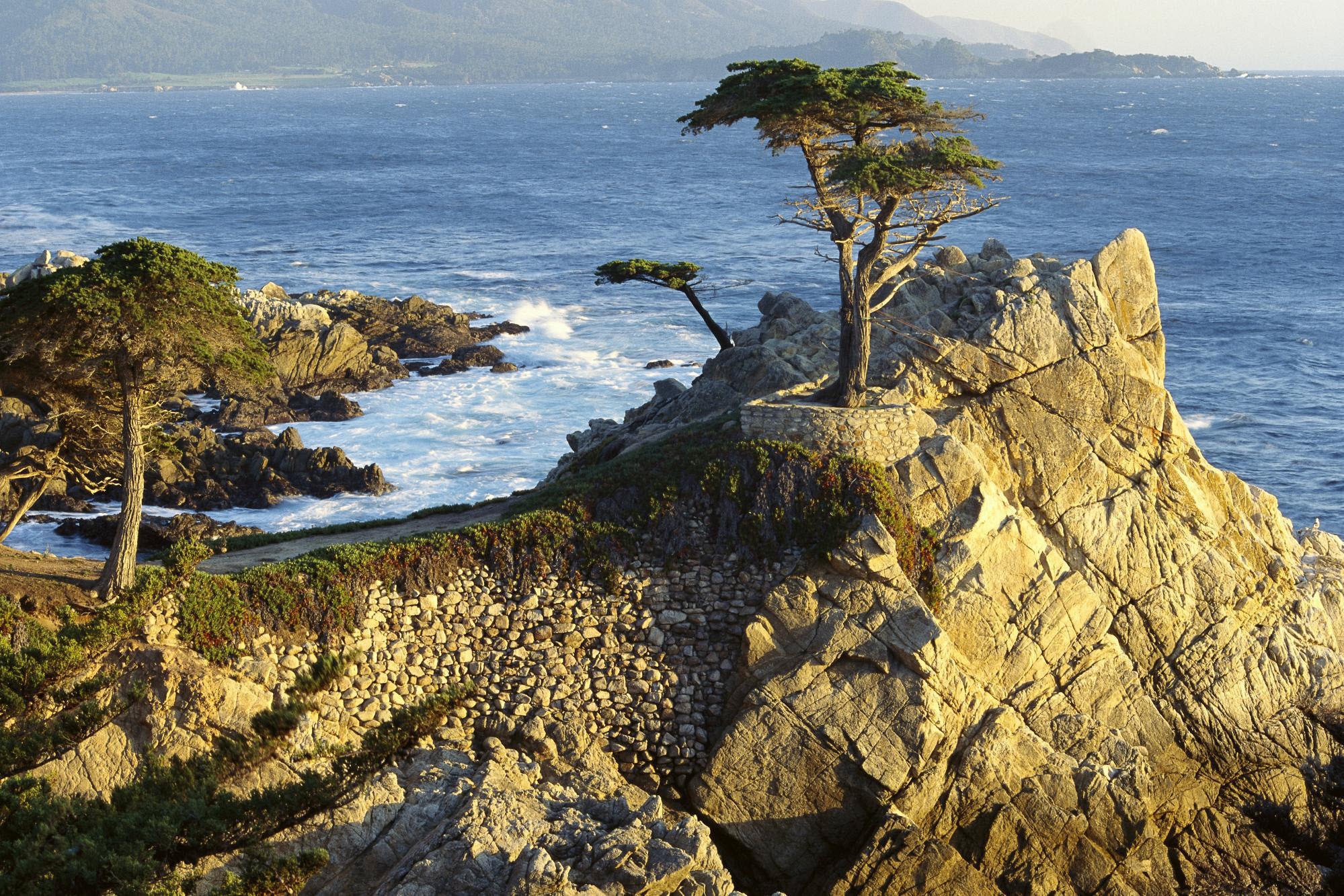 дерево море высота  № 964171 загрузить