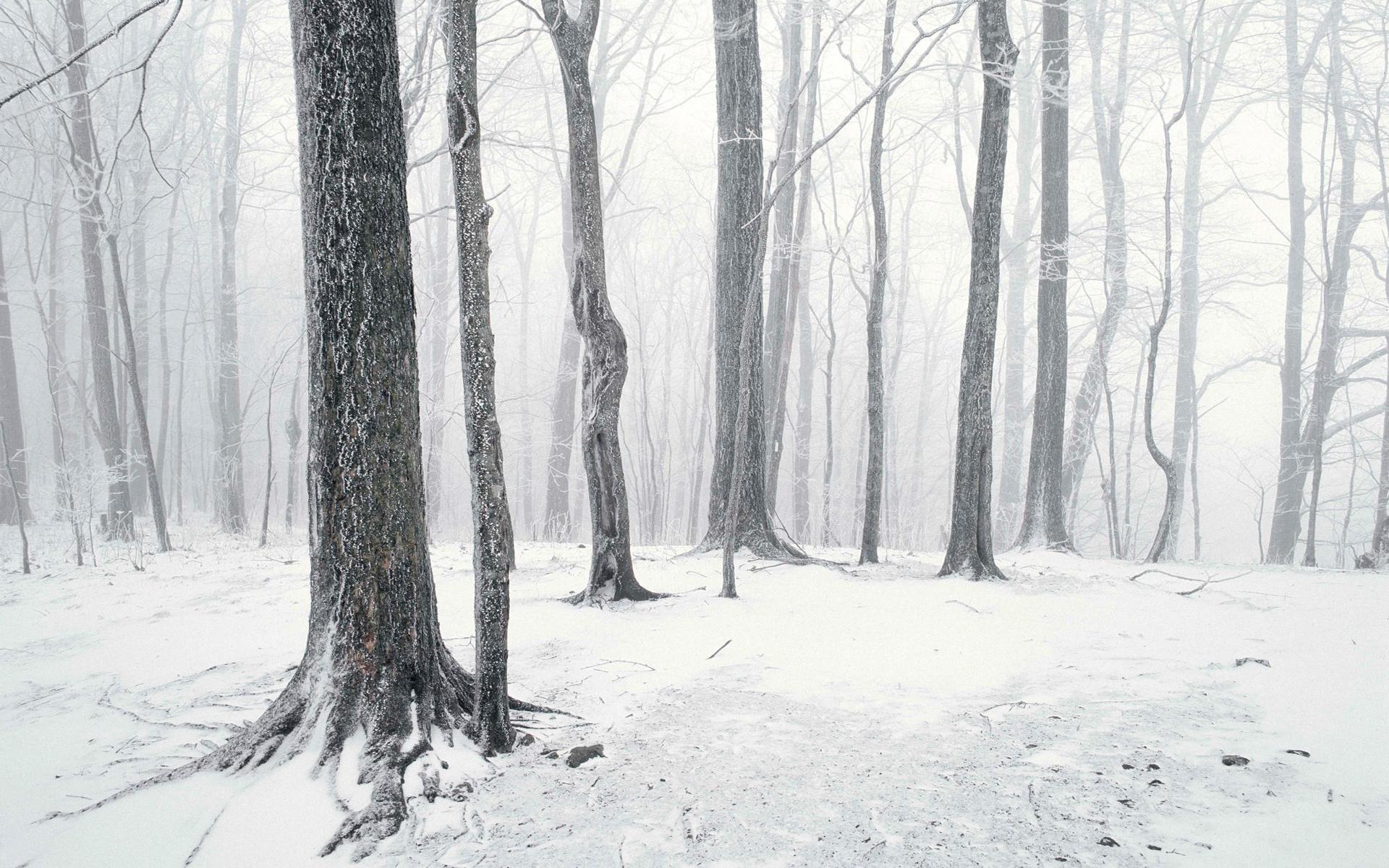 снежные деревья скачать