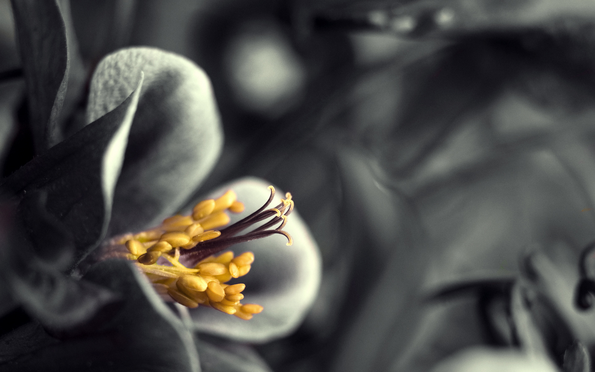 макро цветок пестик  № 3231526 бесплатно