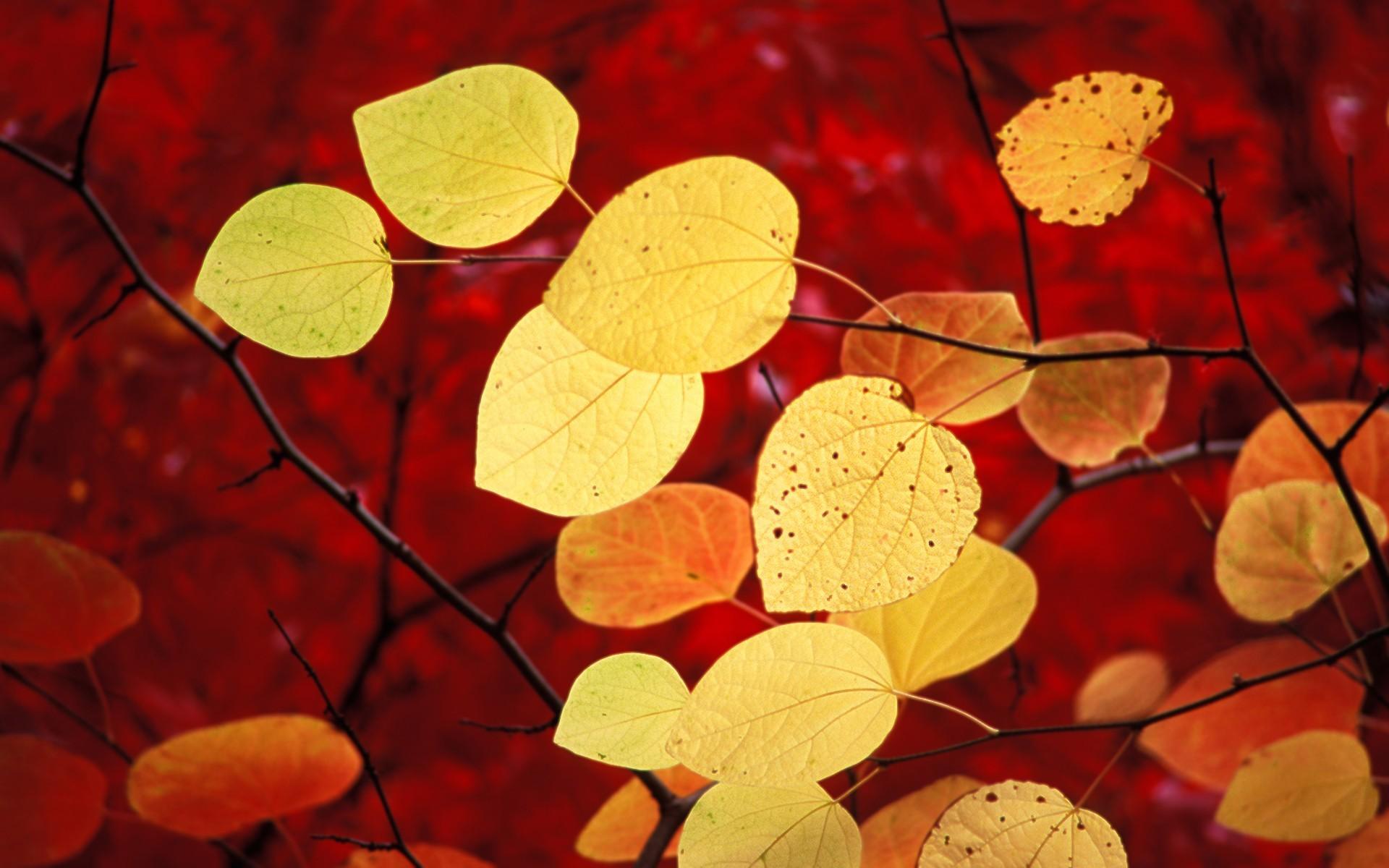 разное природа лампа цветы желтые осень  № 2634560  скачать