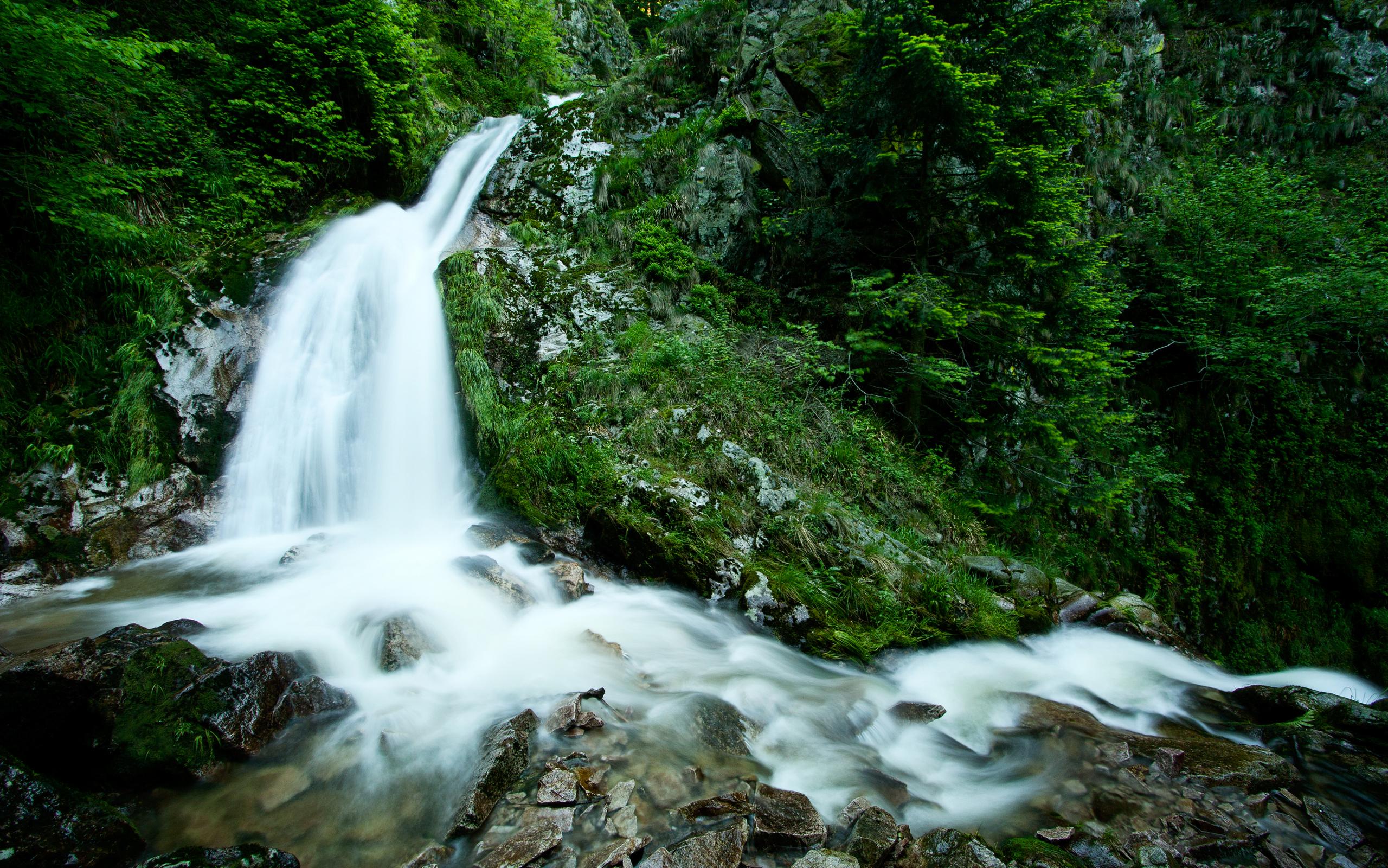 водопад среди деревьев  № 373555  скачать