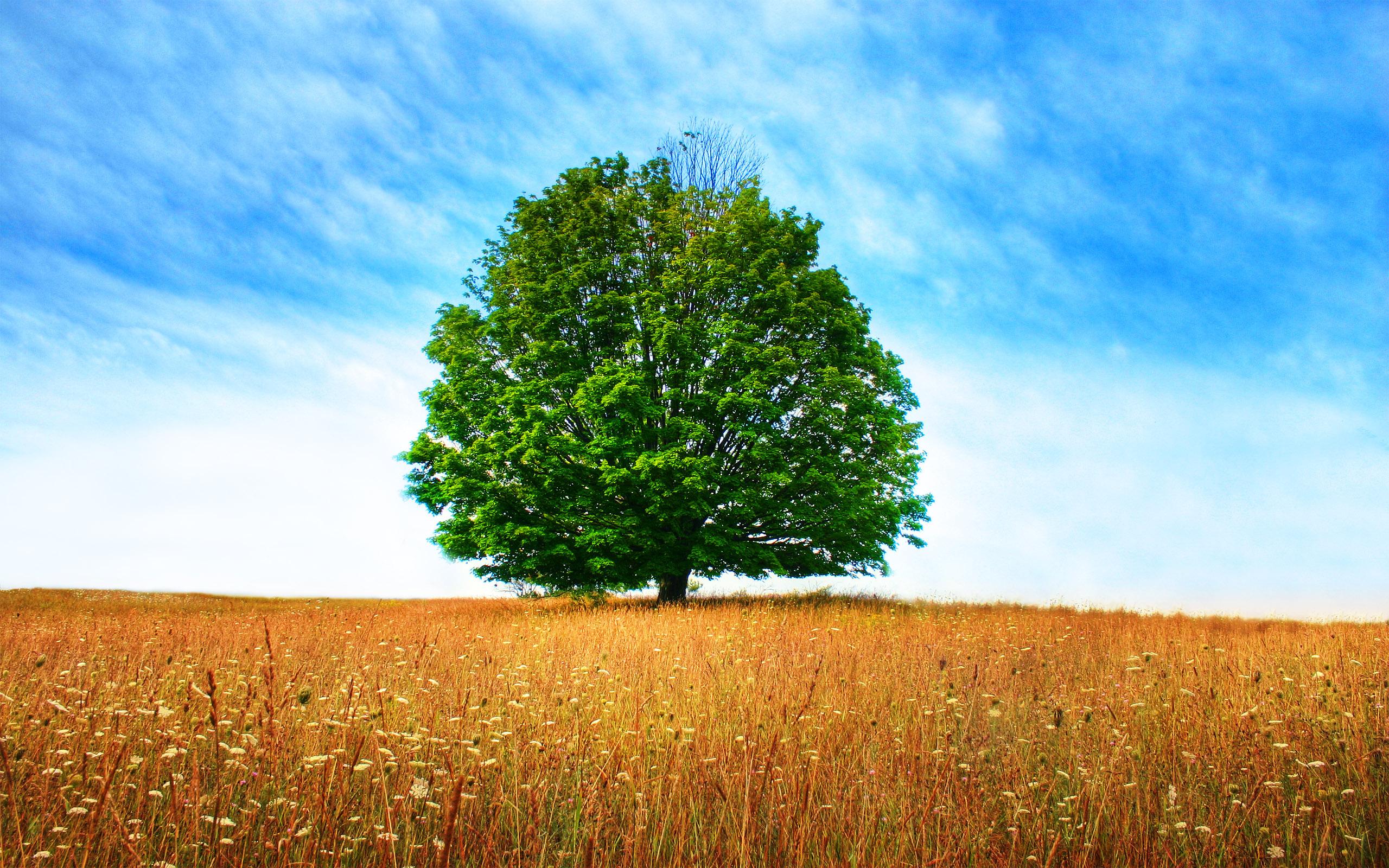 природа деревья поле без смс