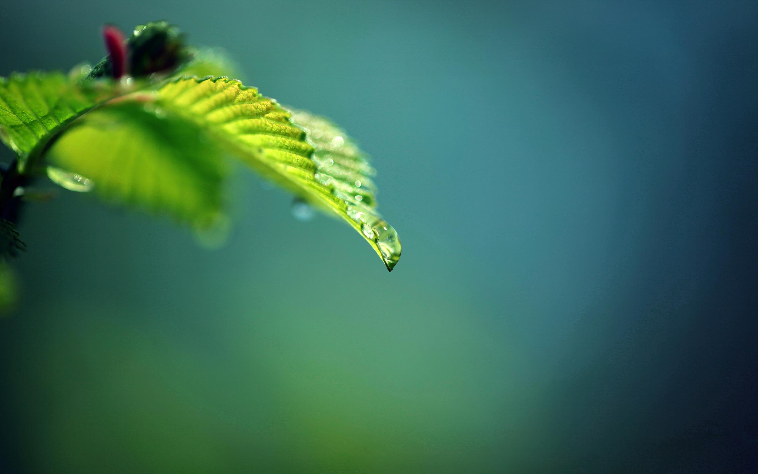 капли листки лес бесплатно