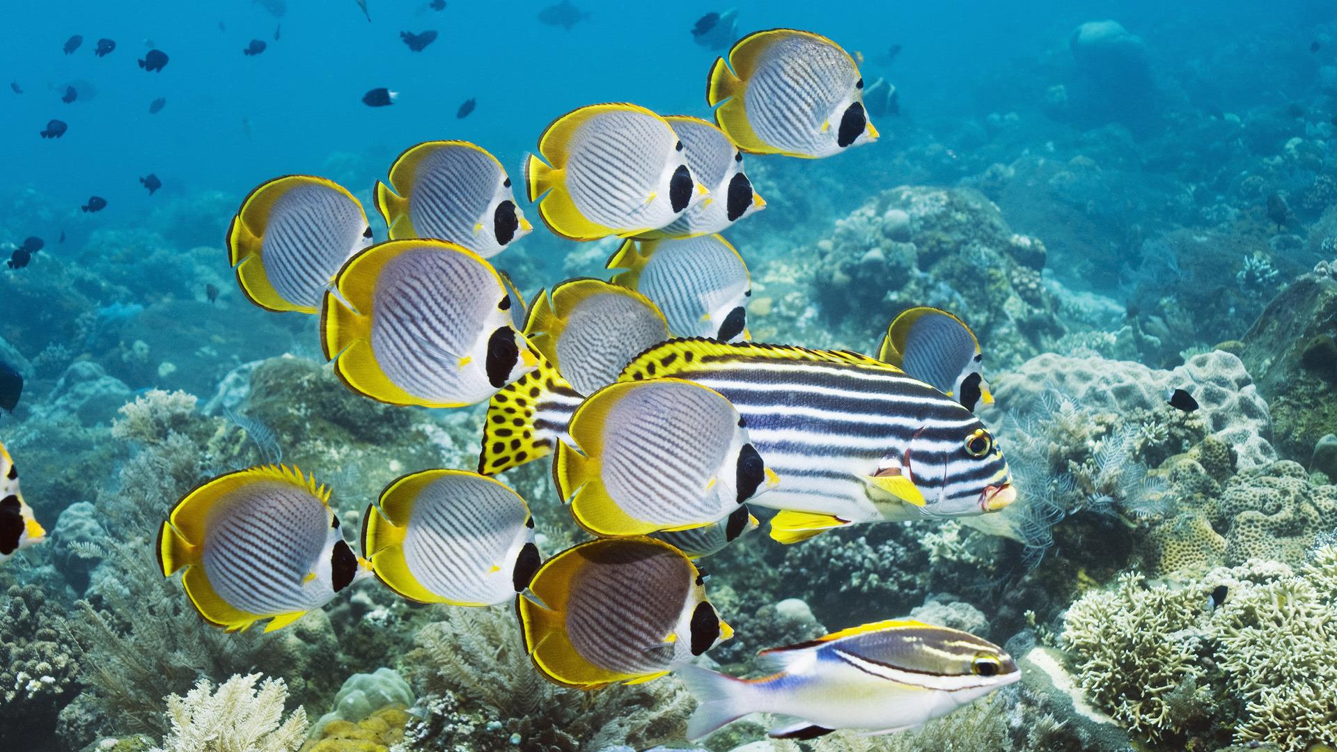 Желтая рыбка  № 1707638  скачать