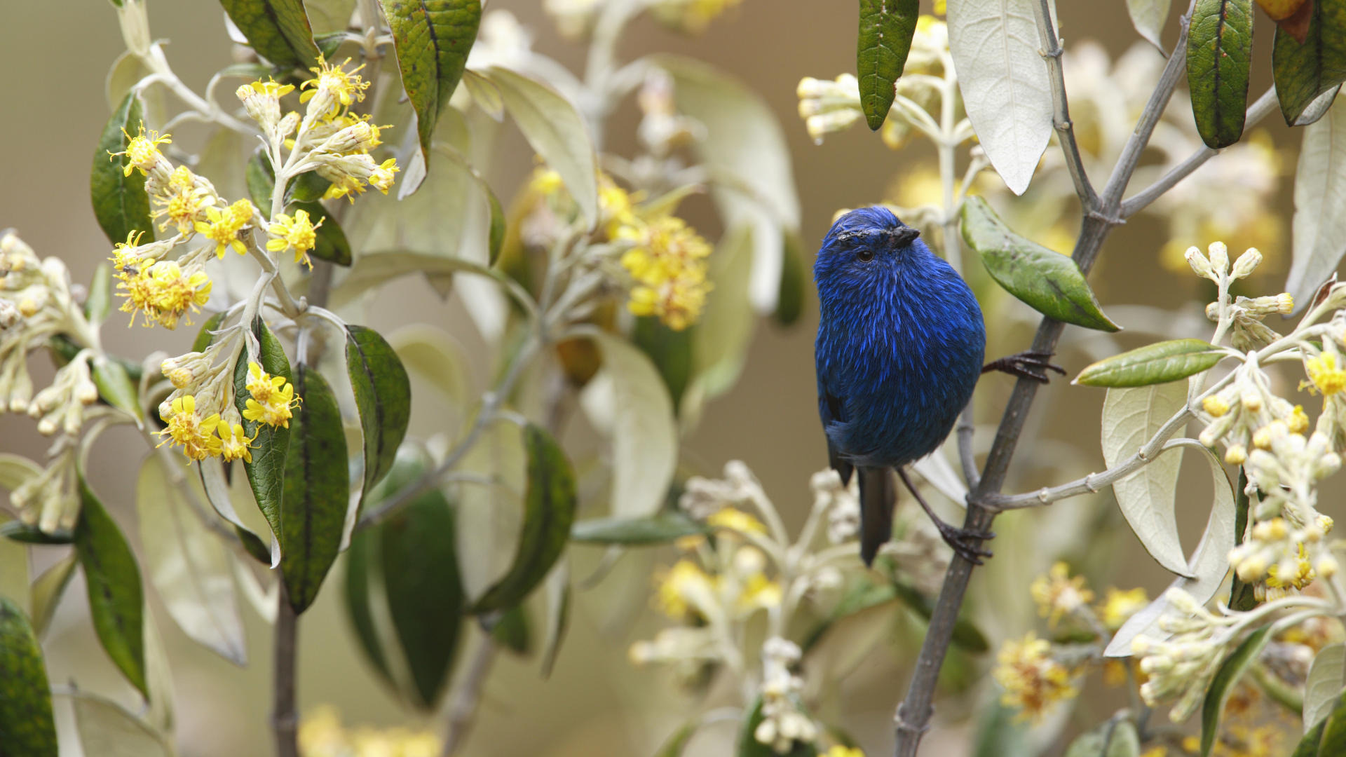 птица цветок  № 2034131 бесплатно