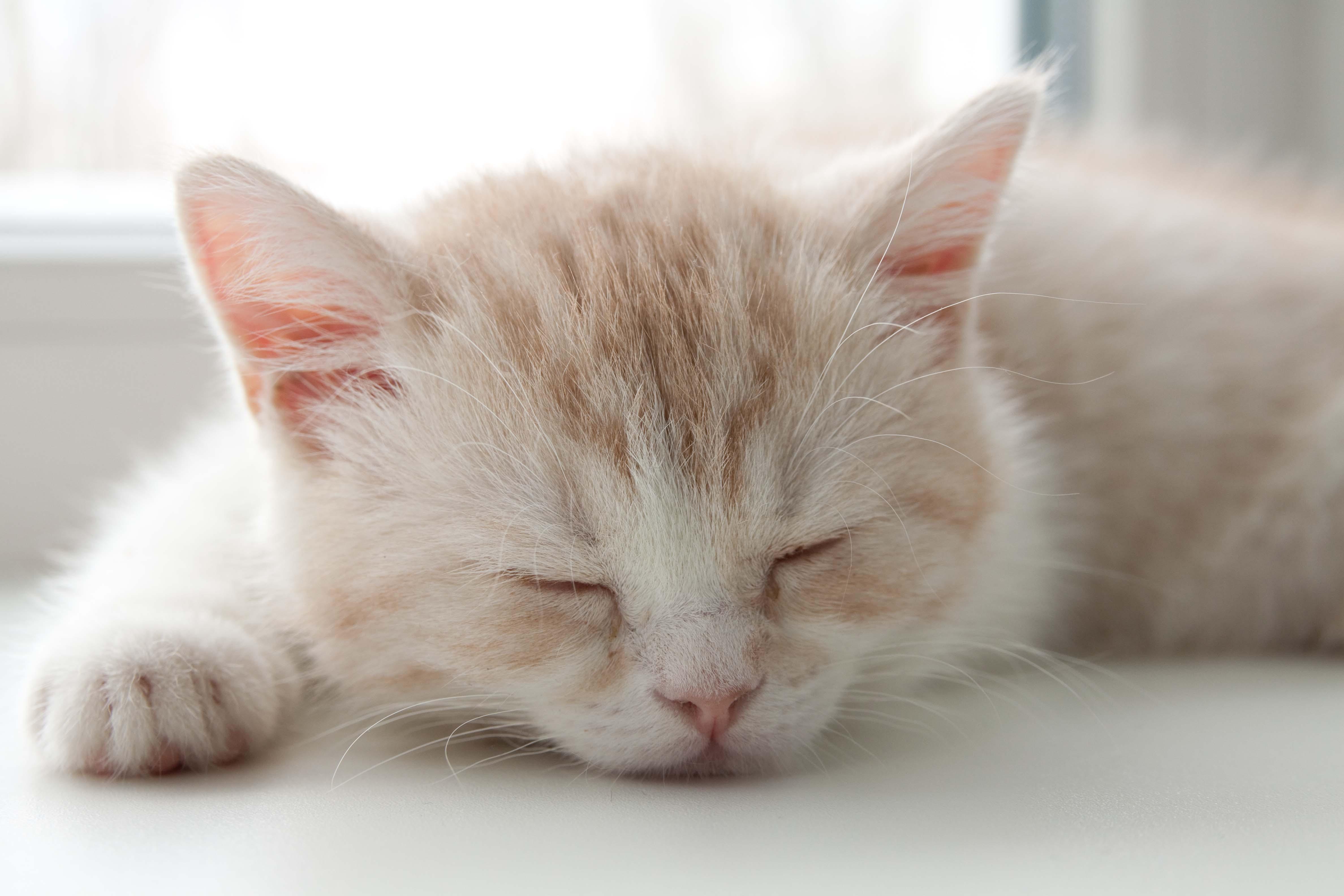 Спящий кот  № 1059252 загрузить