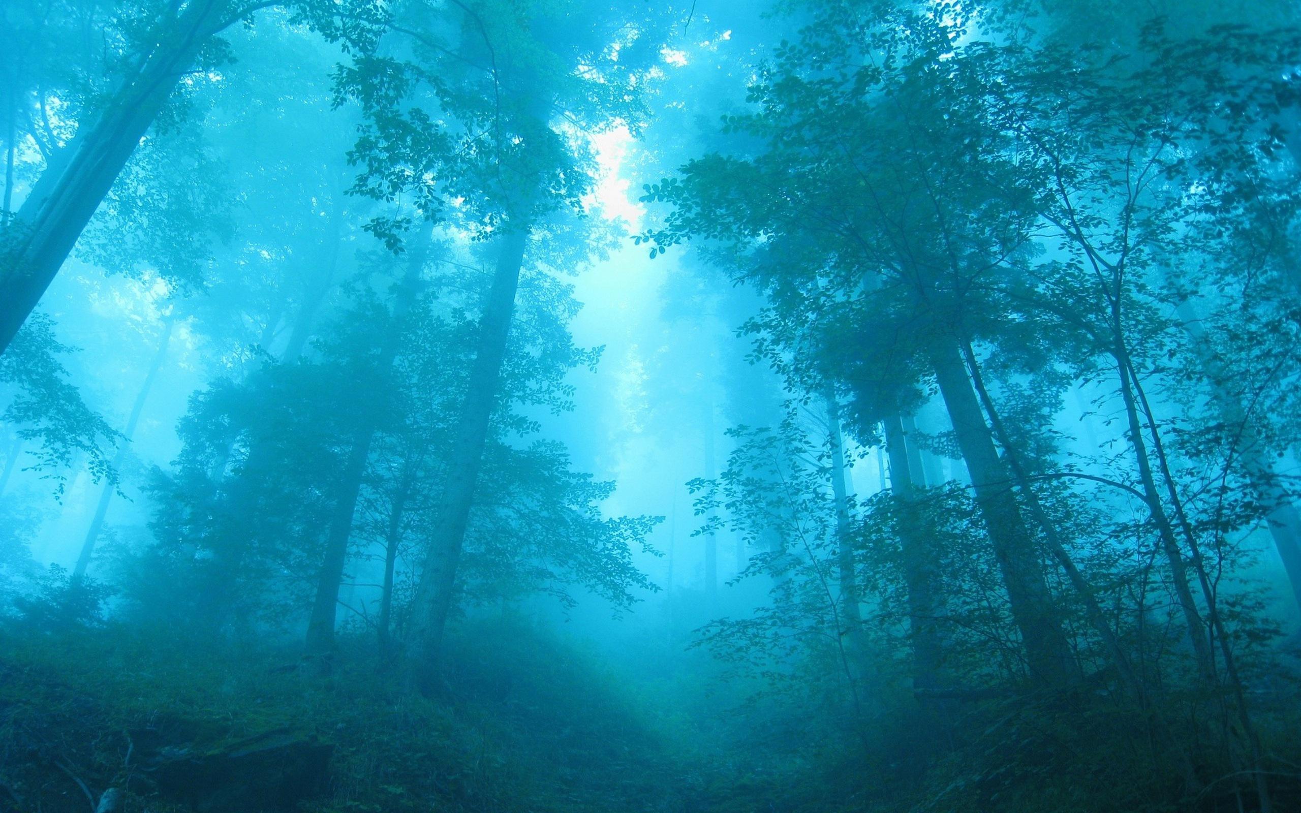 обои на рабочий стол лес в тумане hd № 251983 загрузить