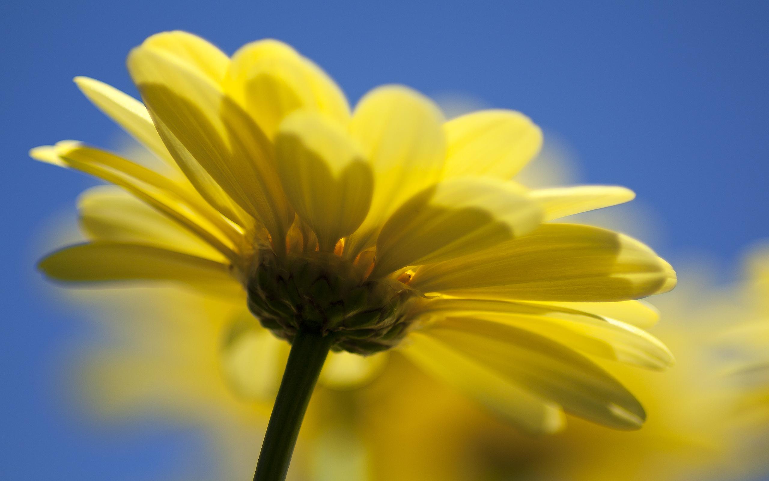 природа цветок желтый бесплатно