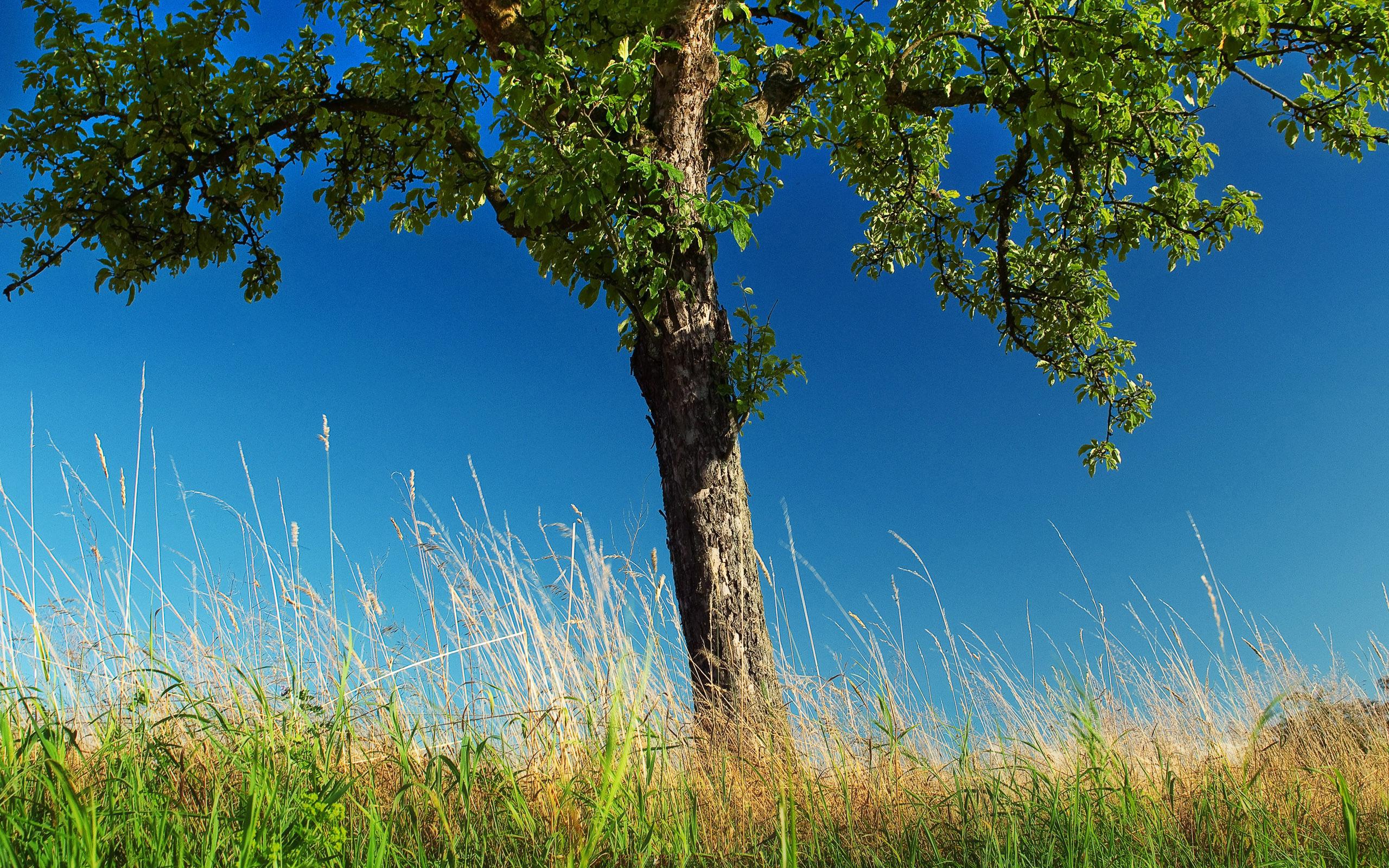 большое дерево  № 1647779  скачать