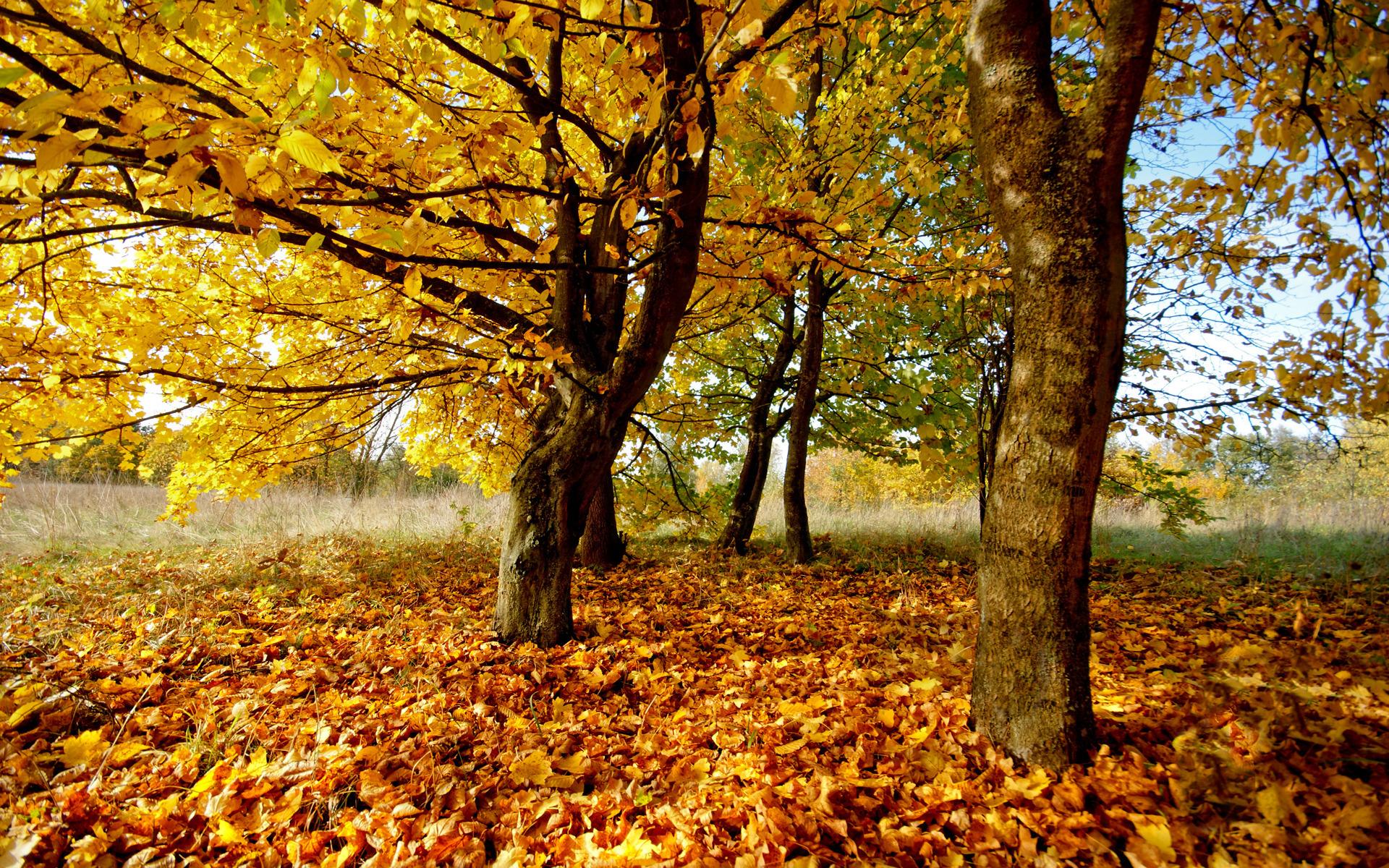 природа деревья листья осень nature trees leaves autumn загрузить