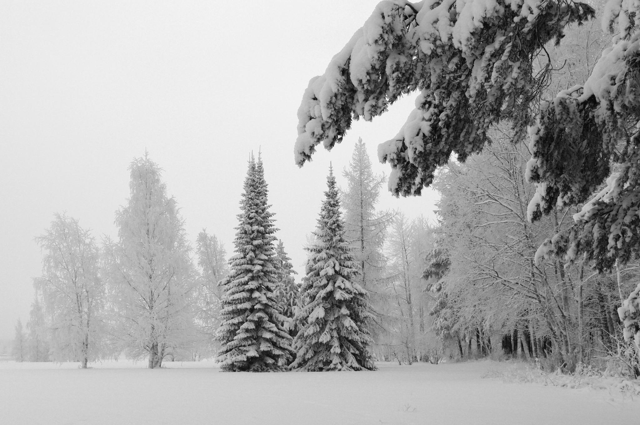 снег ветви лес snow branches forest  № 442877 загрузить