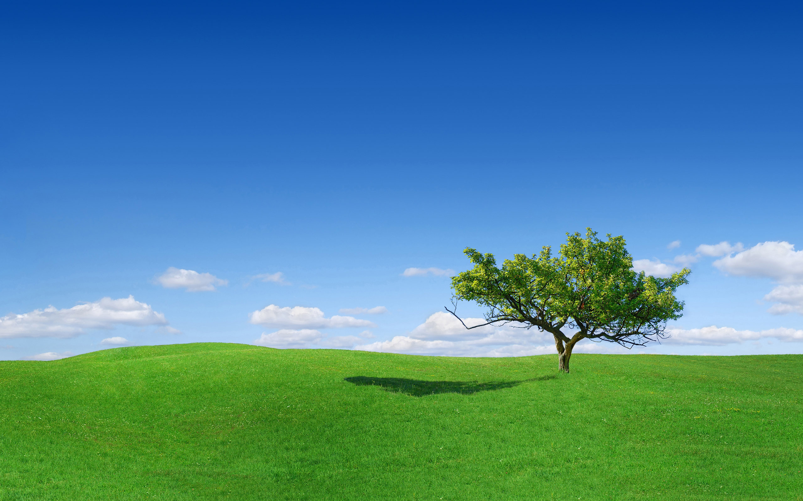 накренившееся дерево  № 989990 без смс