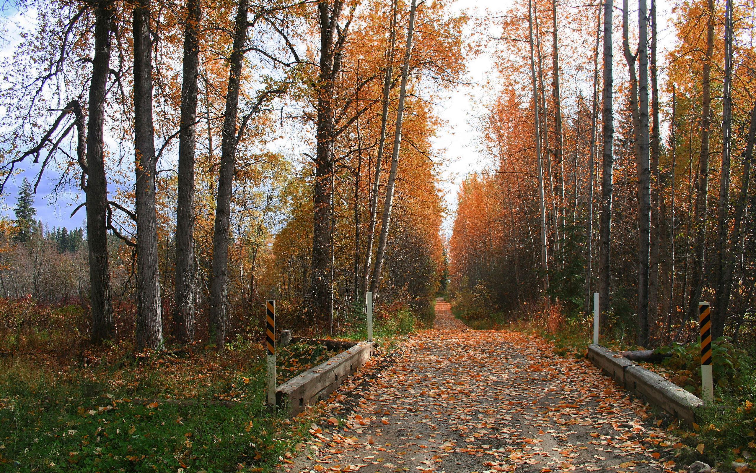 деревья парк осень роща  № 3186130 бесплатно