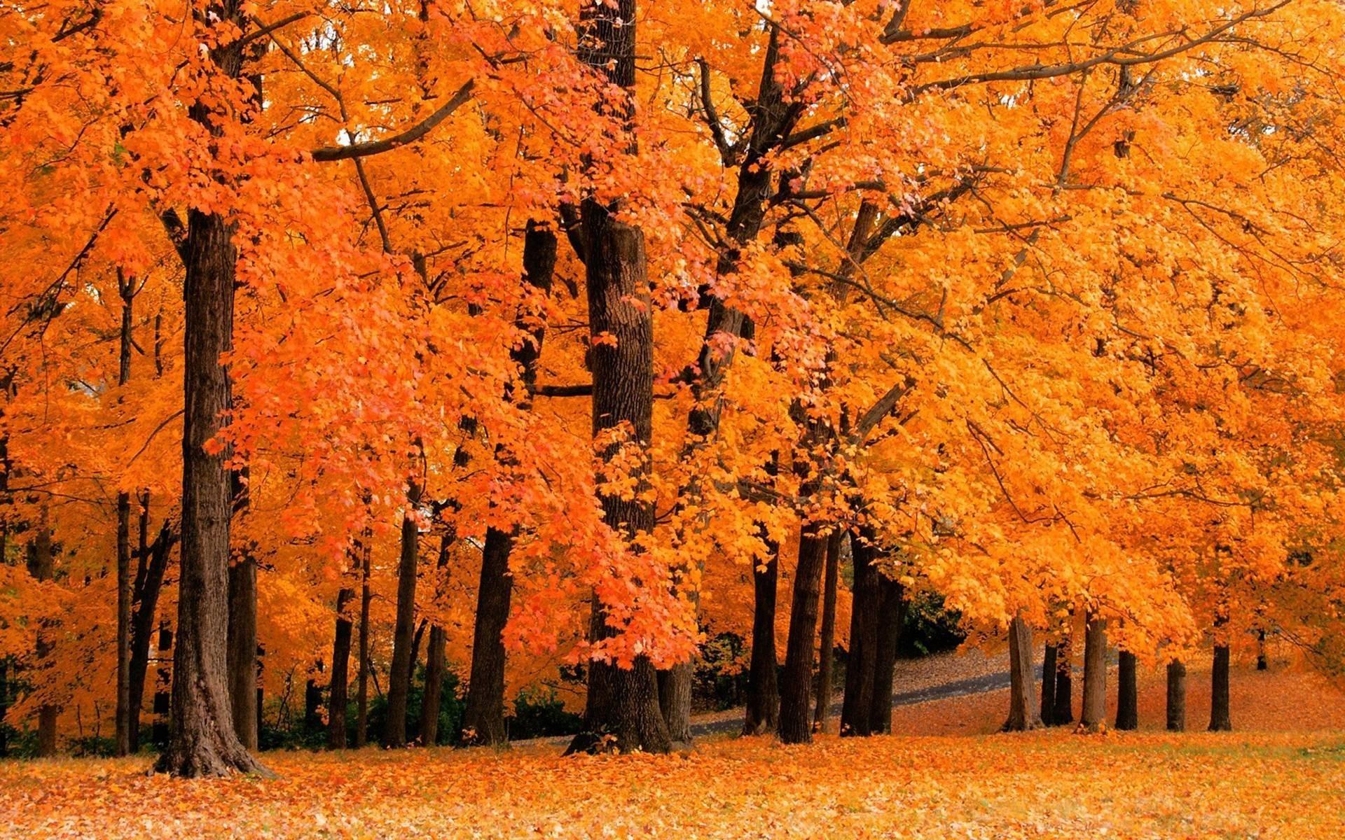 осень, деревья, листва, листопад без смс
