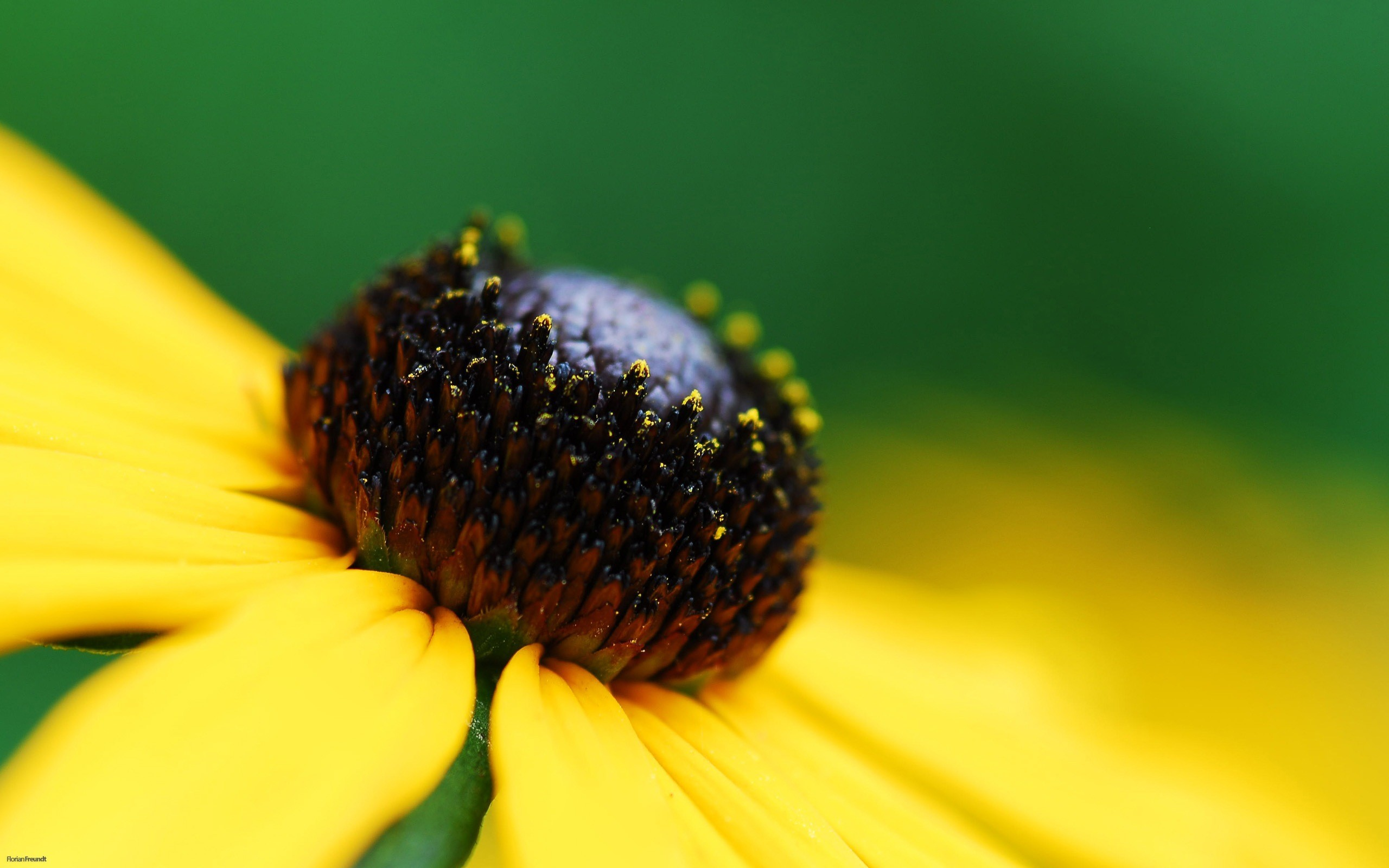 цветы макро желтые flowers macro yellow  № 910247 бесплатно