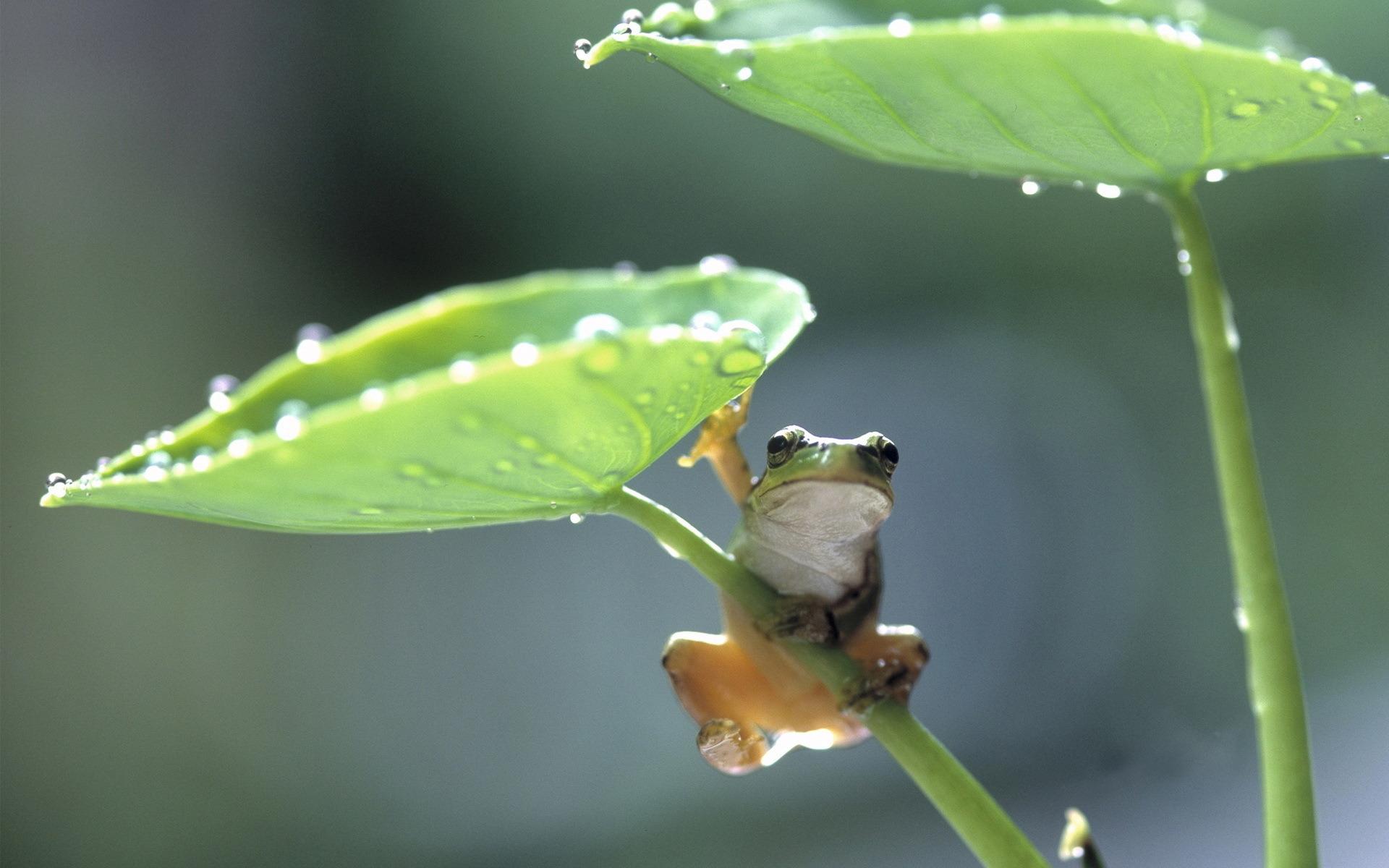 Лягушка бабочка на травинке без смс