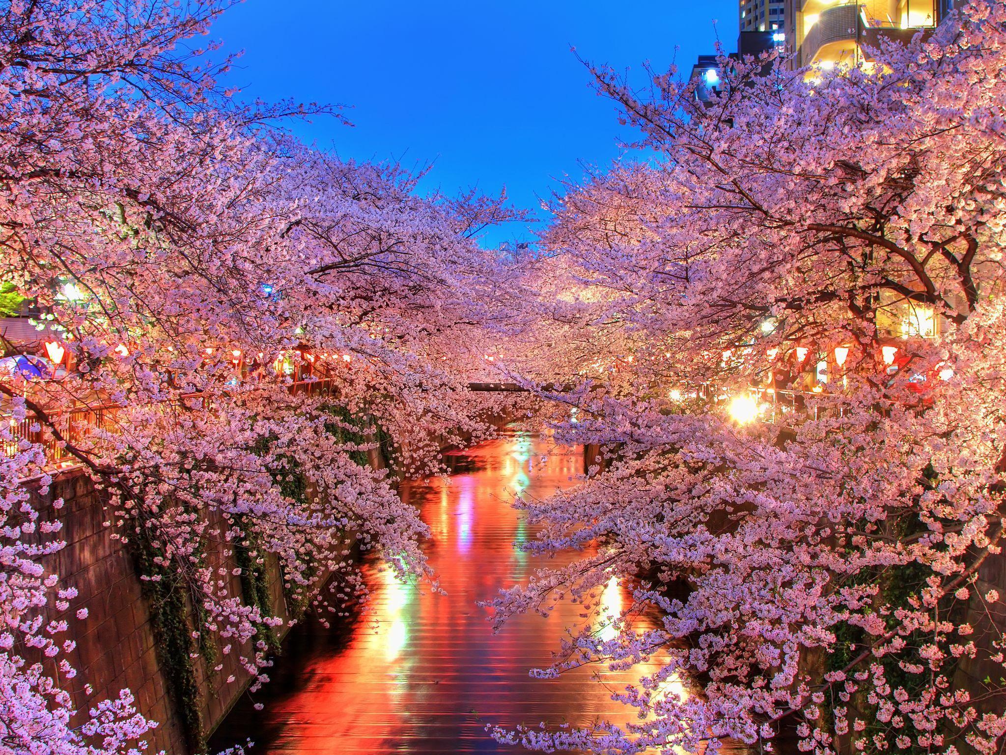 Японская картинка сакура, лет