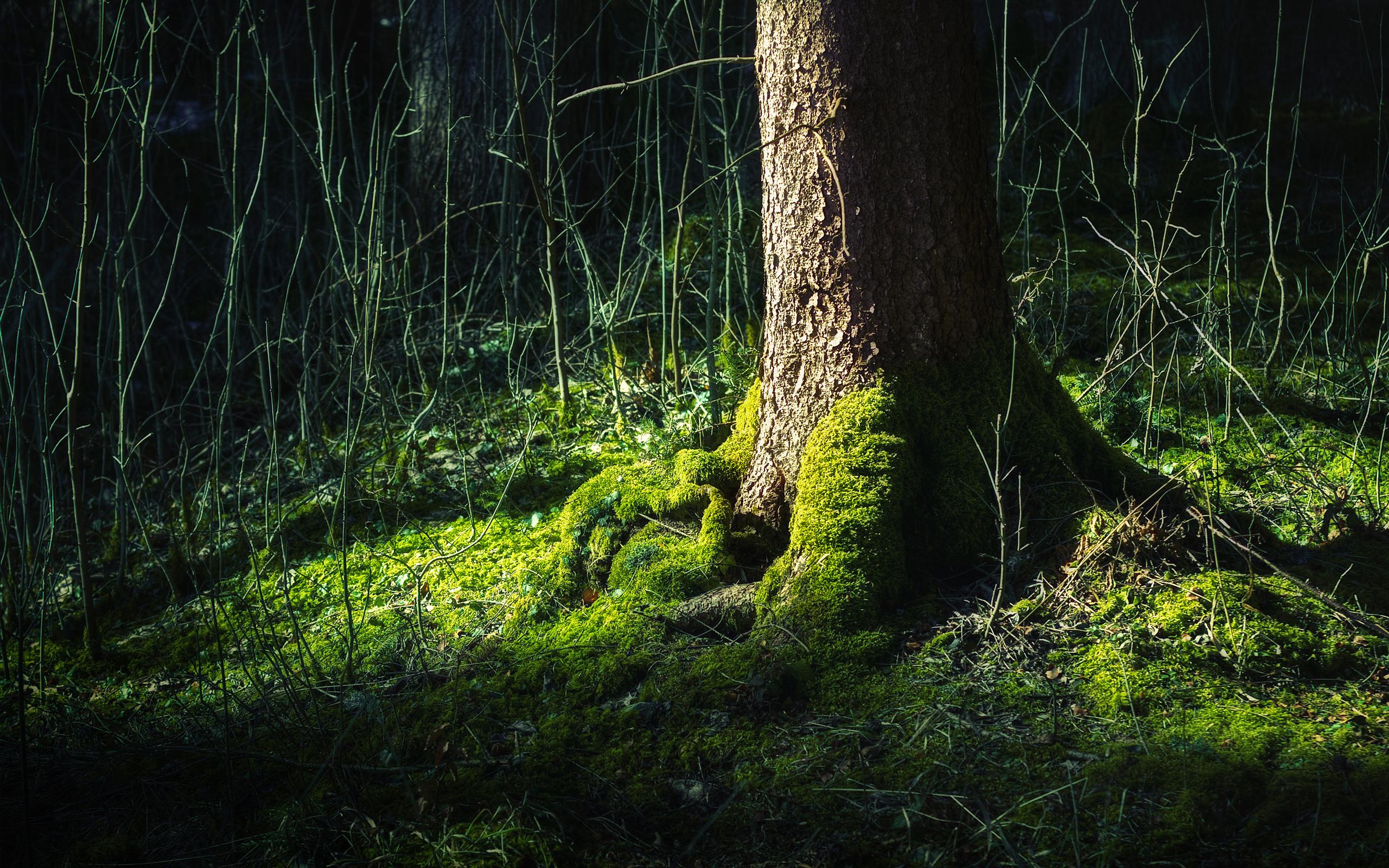 Мох на поваленном дереве без смс