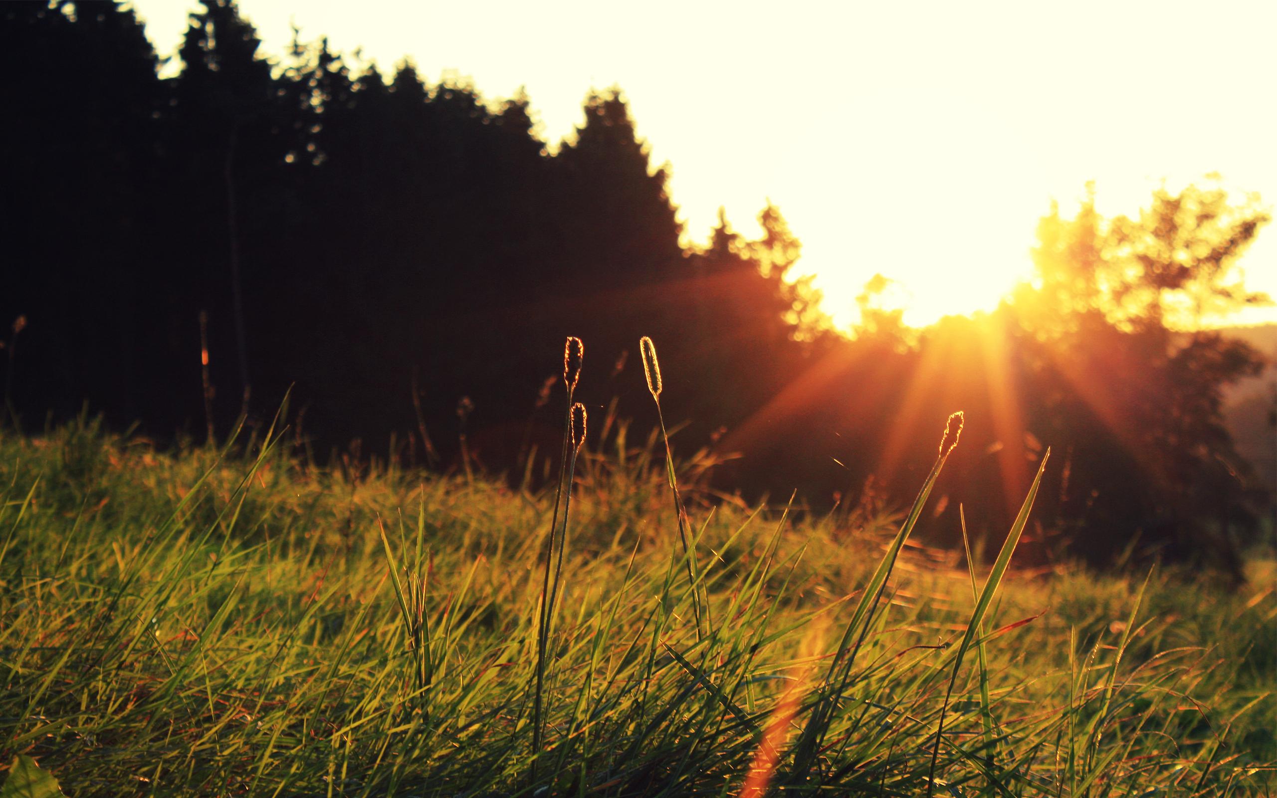 Восход солнца на окраине леса  № 1409528 бесплатно