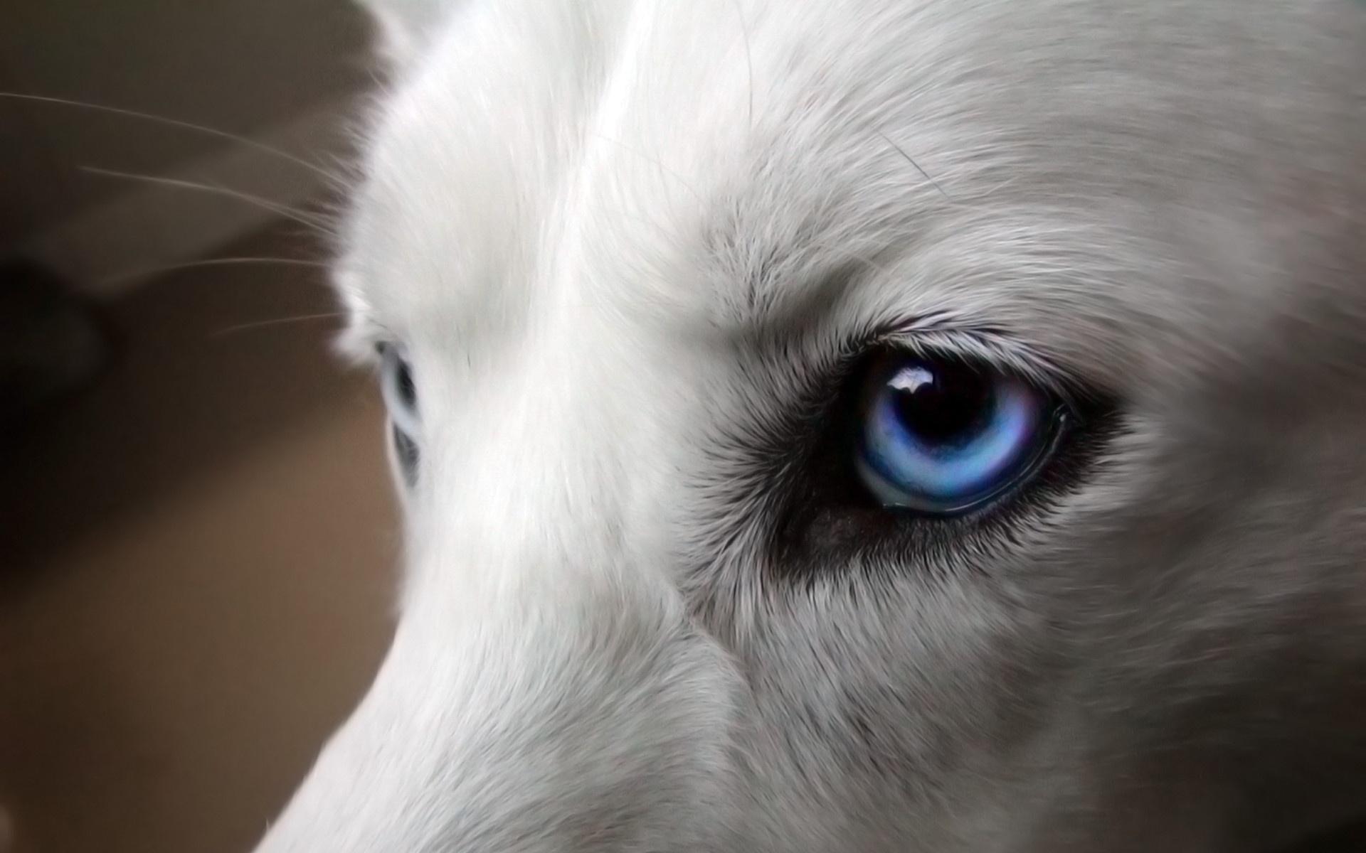 Волчьи глаза бесплатно