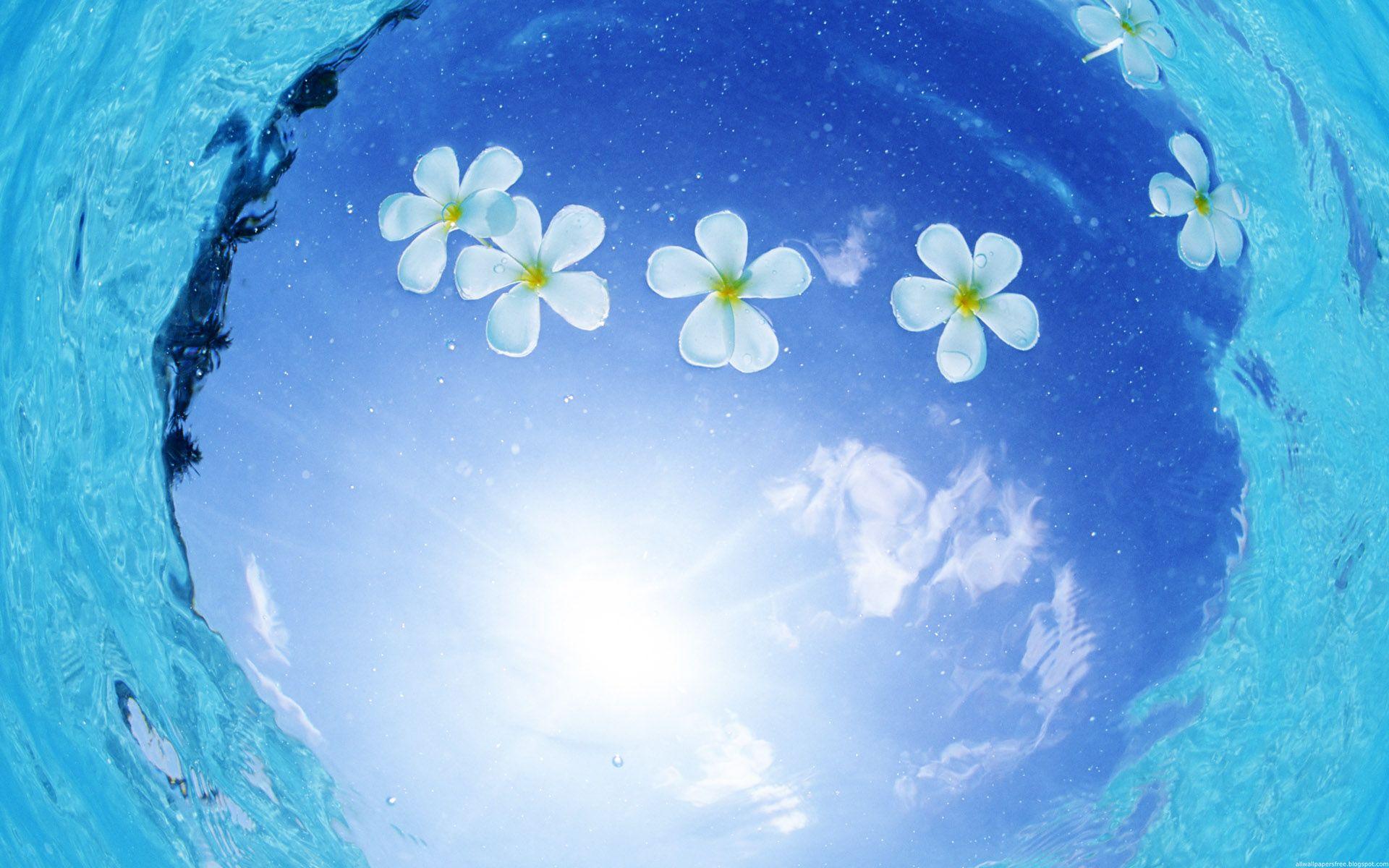 Красивые картинки цветок из воды