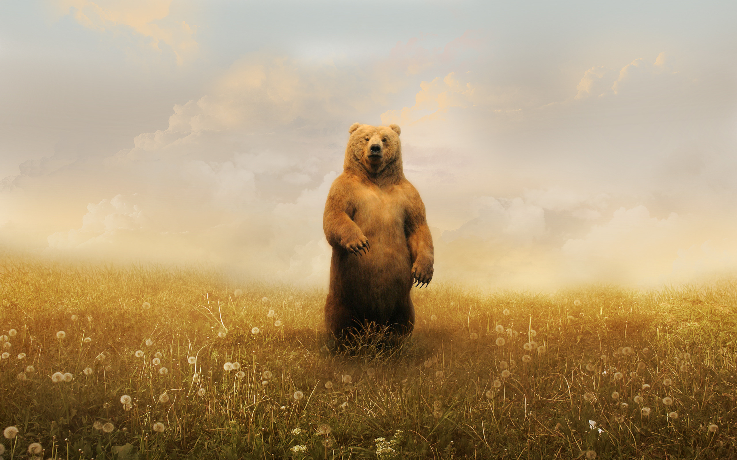 обои для рабочего стола россия медведь для рабочего стола № 206529 без смс