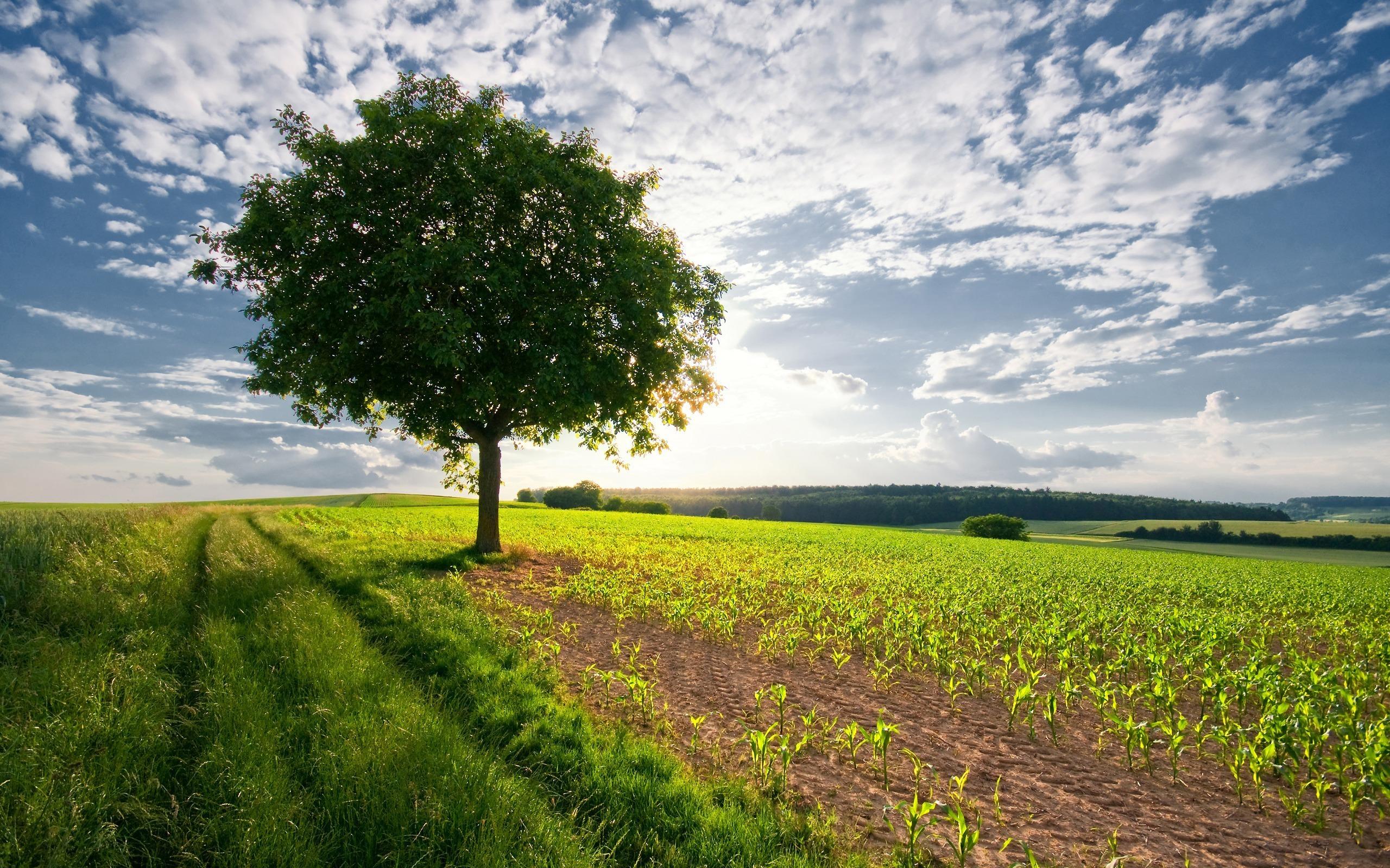 поле дерево  № 3020546  скачать