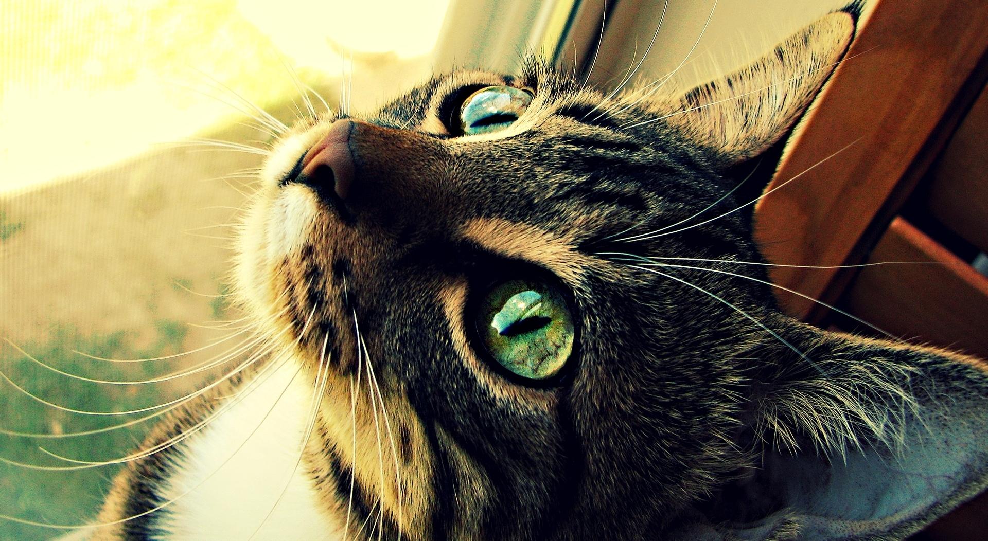 Картинки котов на аватарку