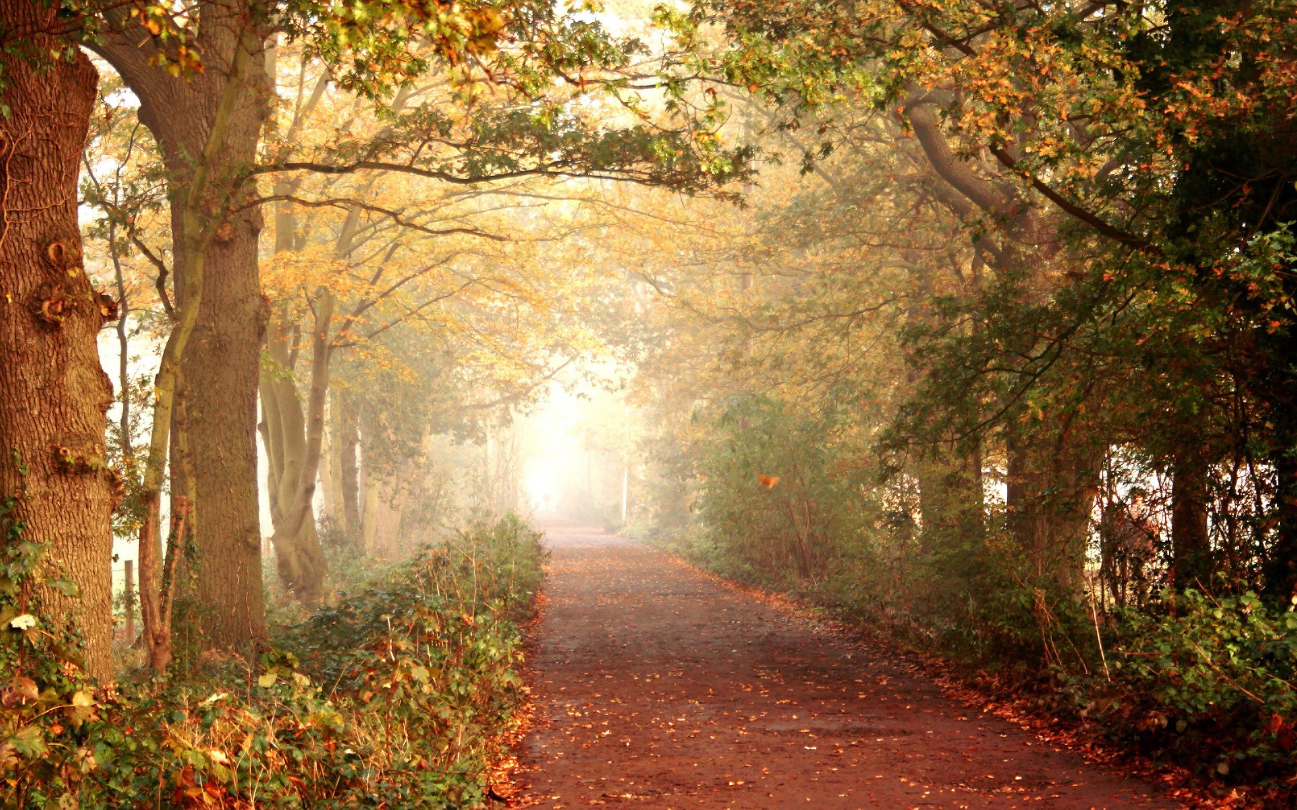 Осення дорожка лесу скачать