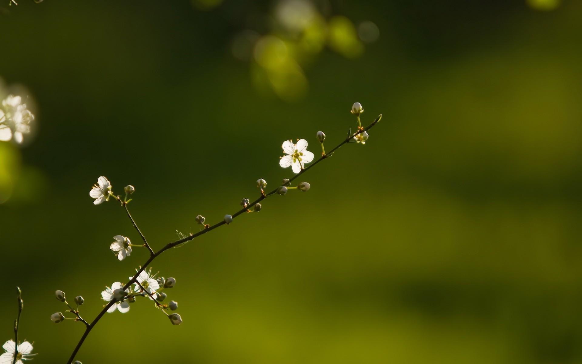 Весна, цветы, веточки скачать