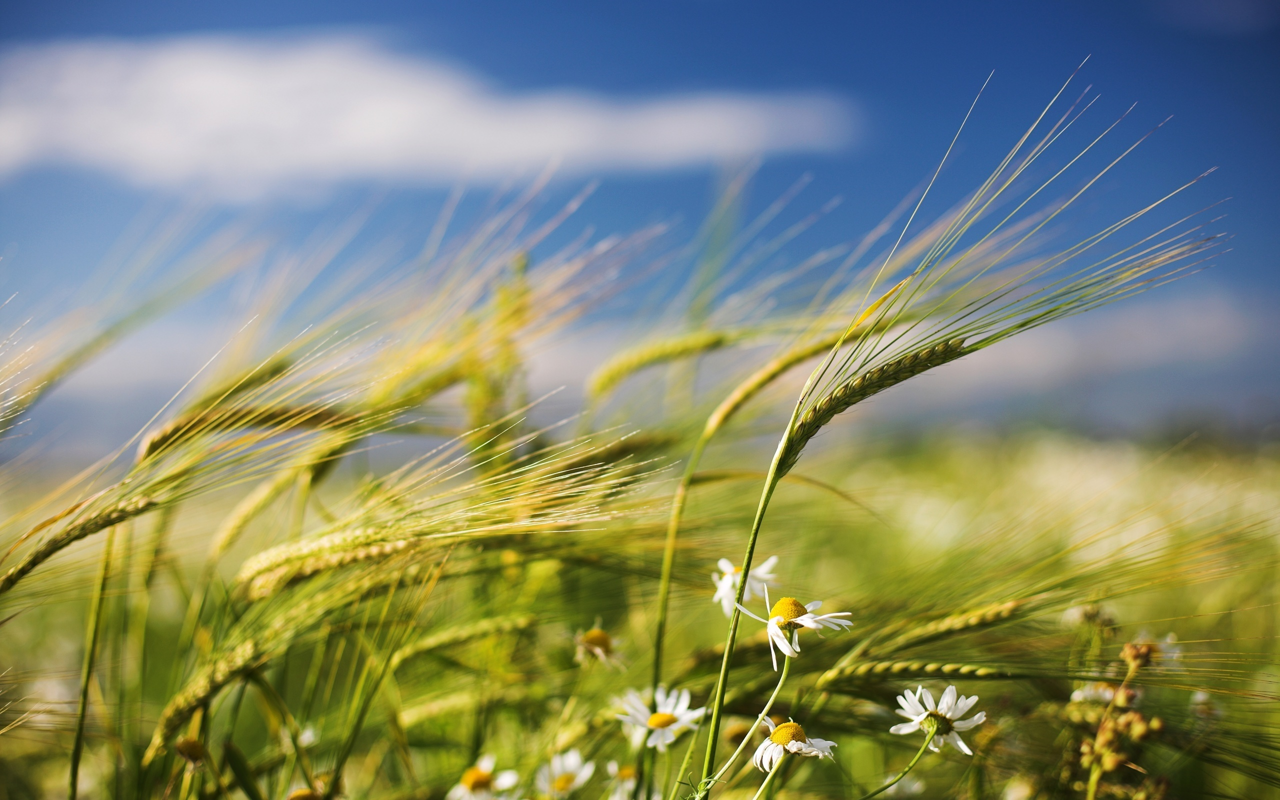 Ветер картинки красивые фото