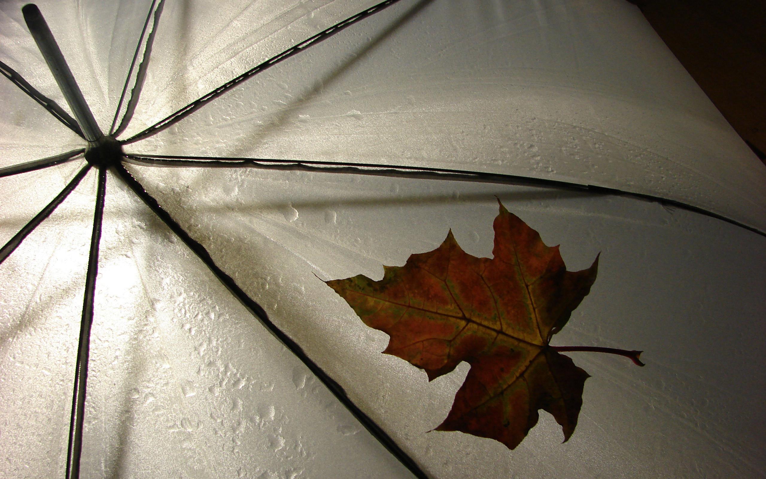 Зонт желтый лужи загрузить