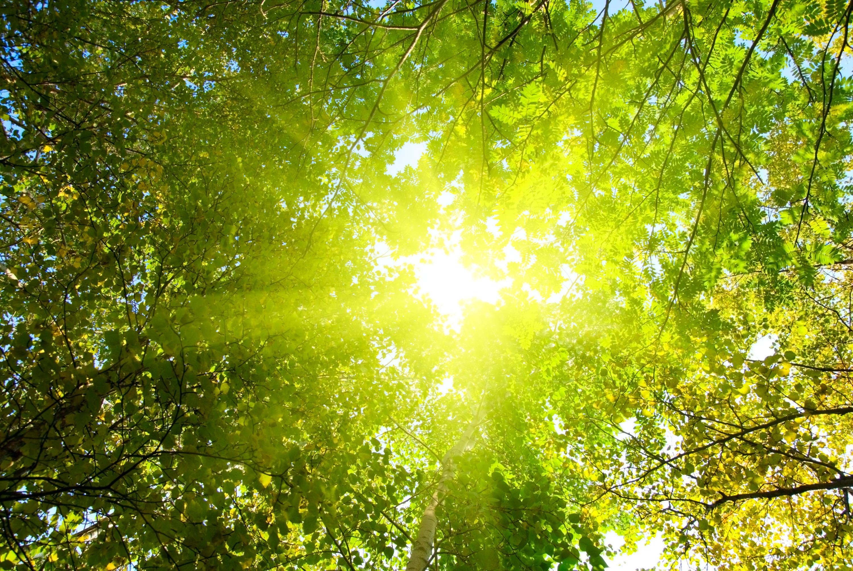 лучи солнца сквозь деревья загрузить