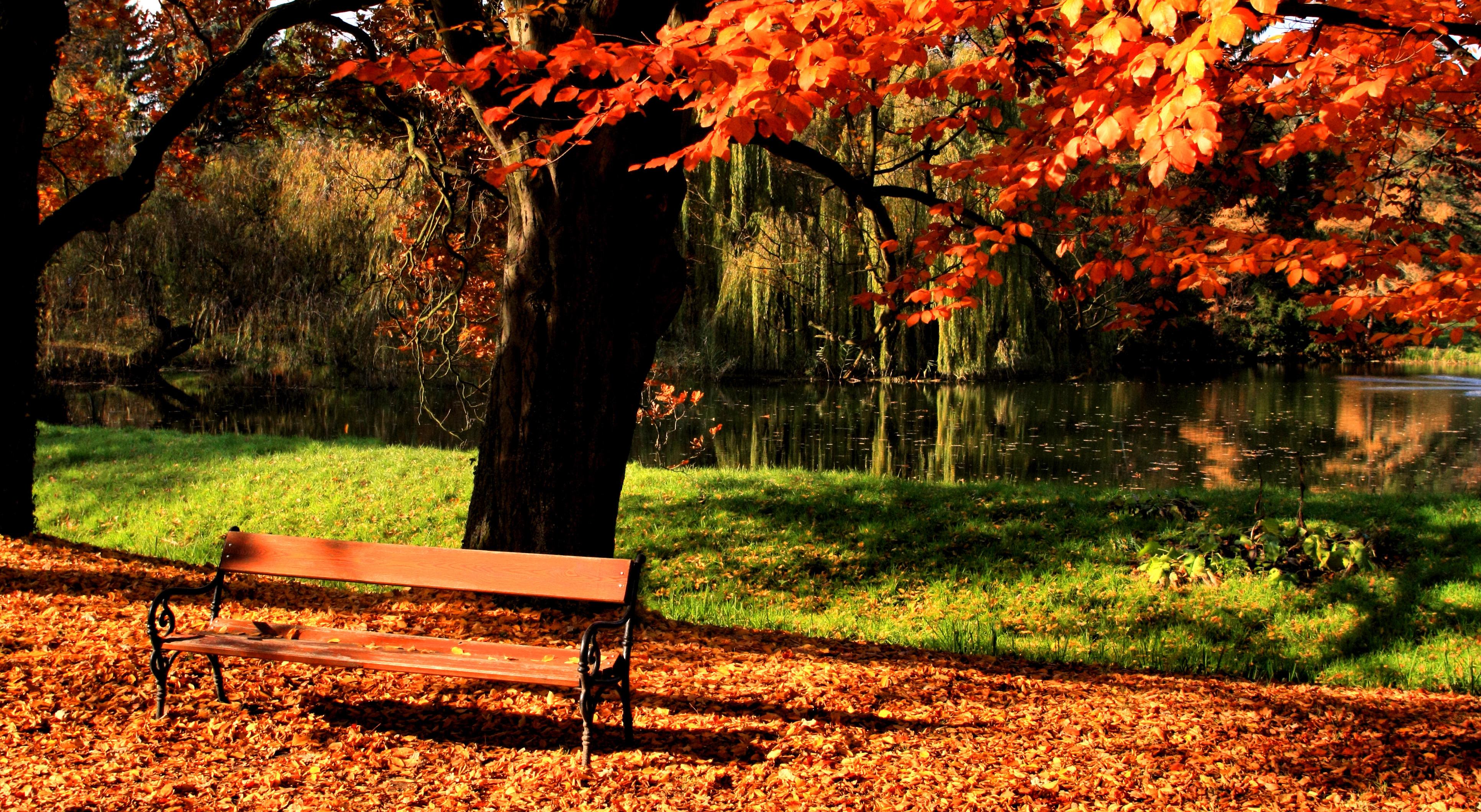 осенние деревья у озера загрузить