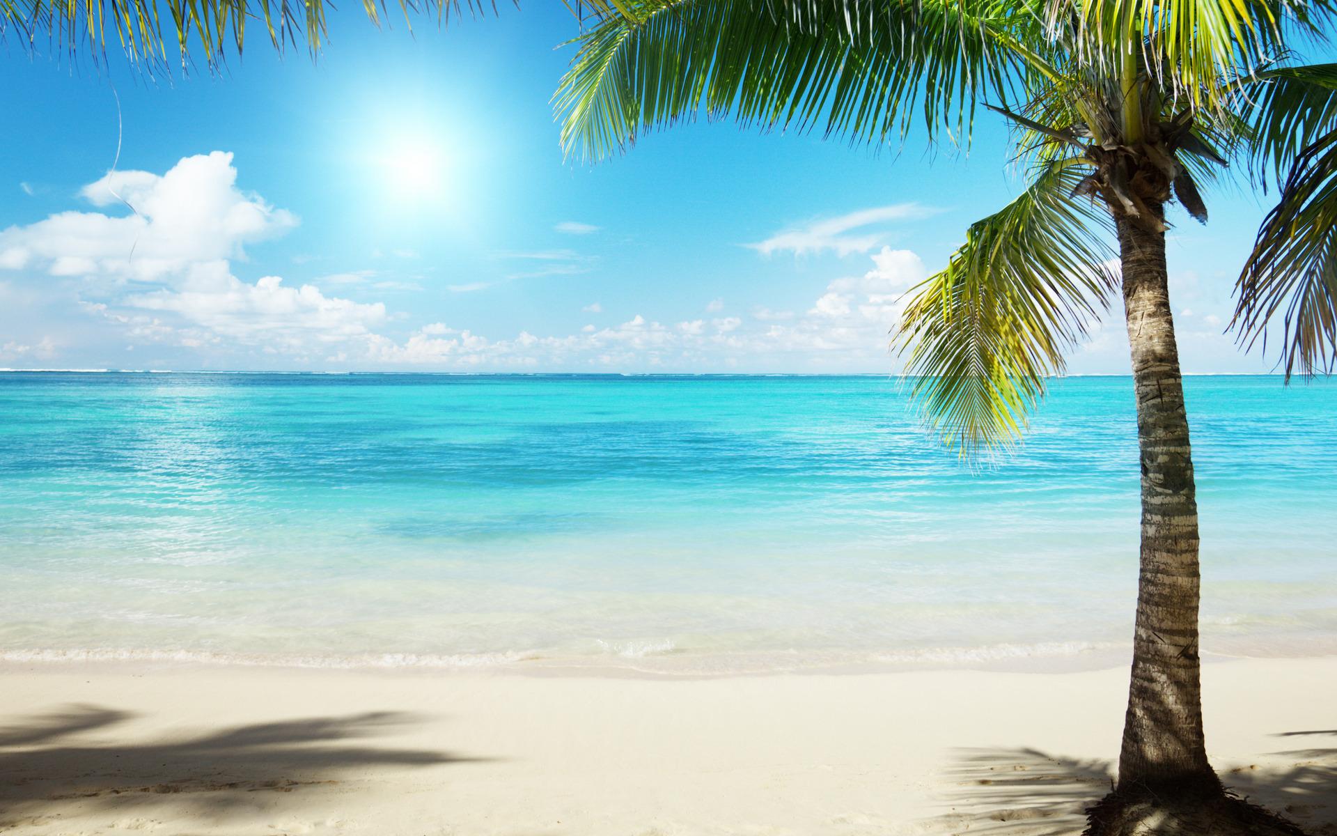 Днем матери, картинки пальмы море солнце