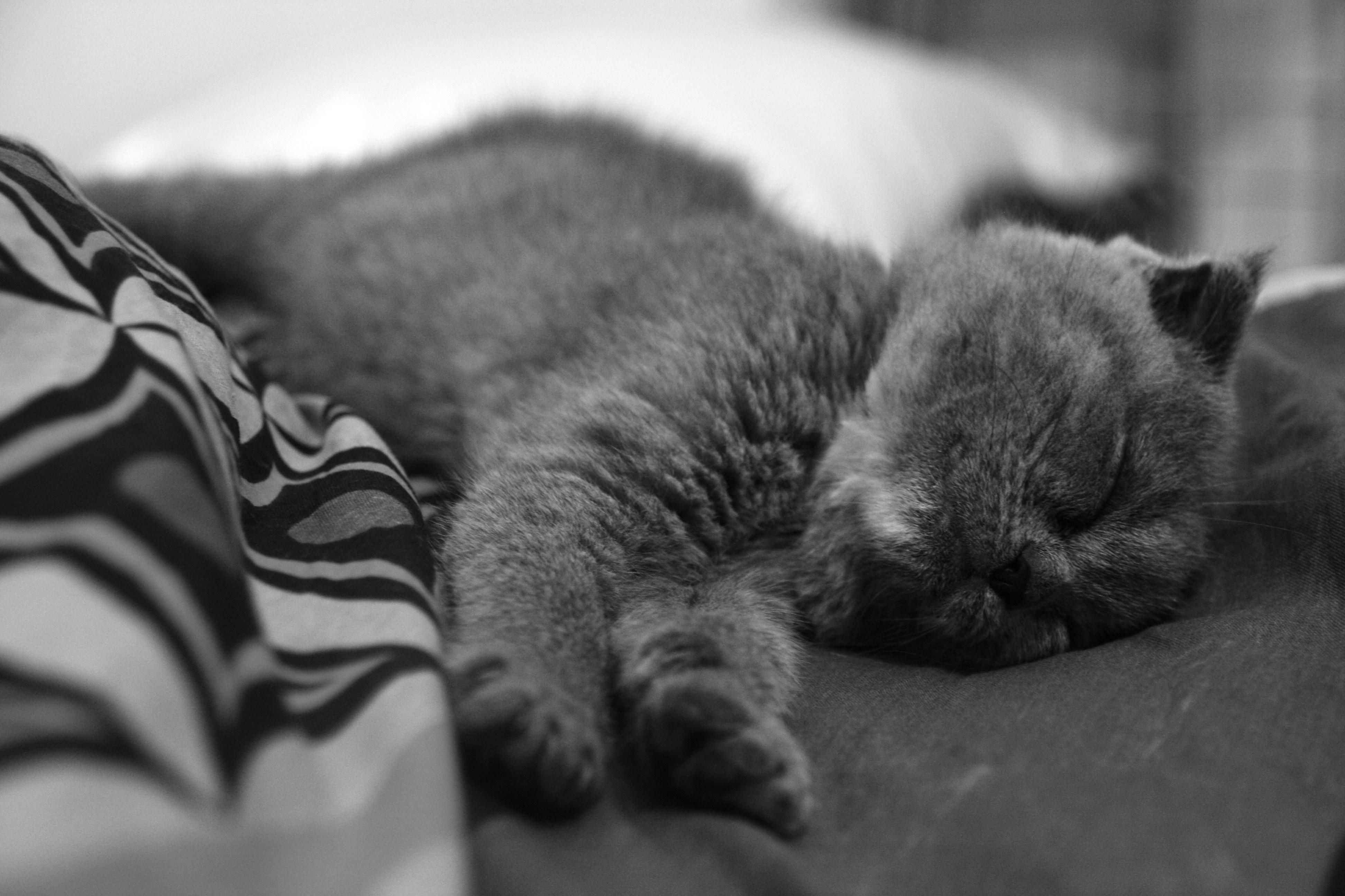 Уставший кот бесплатно