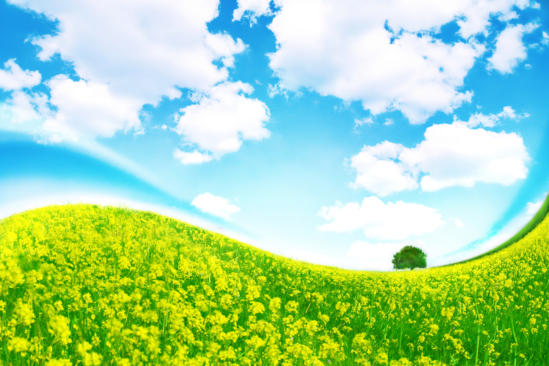природа деревья трава небо облака nature trees grass the sky clouds бесплатно