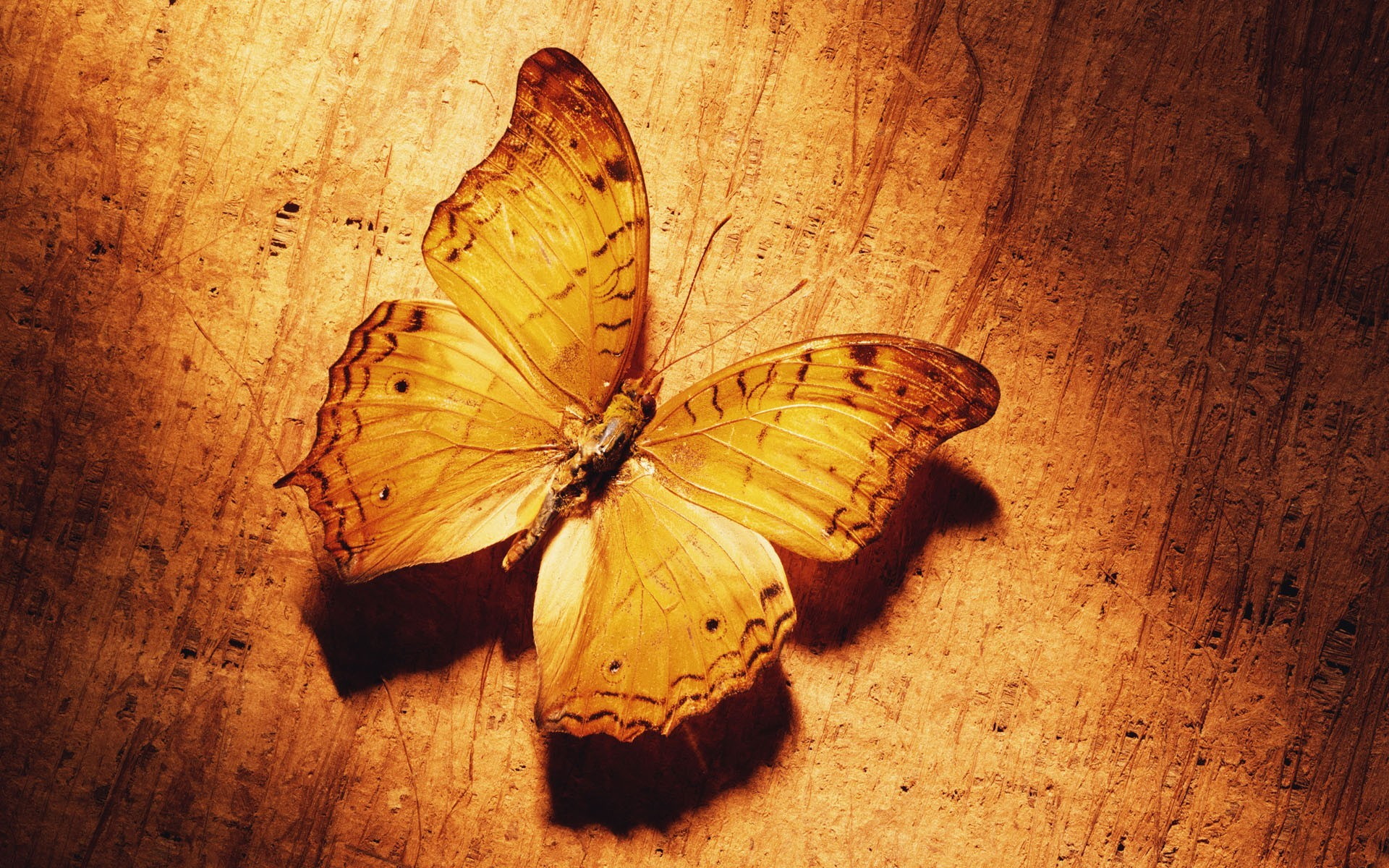 Дерево, бабочки, озерцо без смс